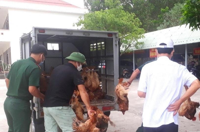 HTX Thực phẩm sạch Phú Ninh vận chuyển gà đến các khu cách ly vào sáng nay 7.4. Ảnh: HTX