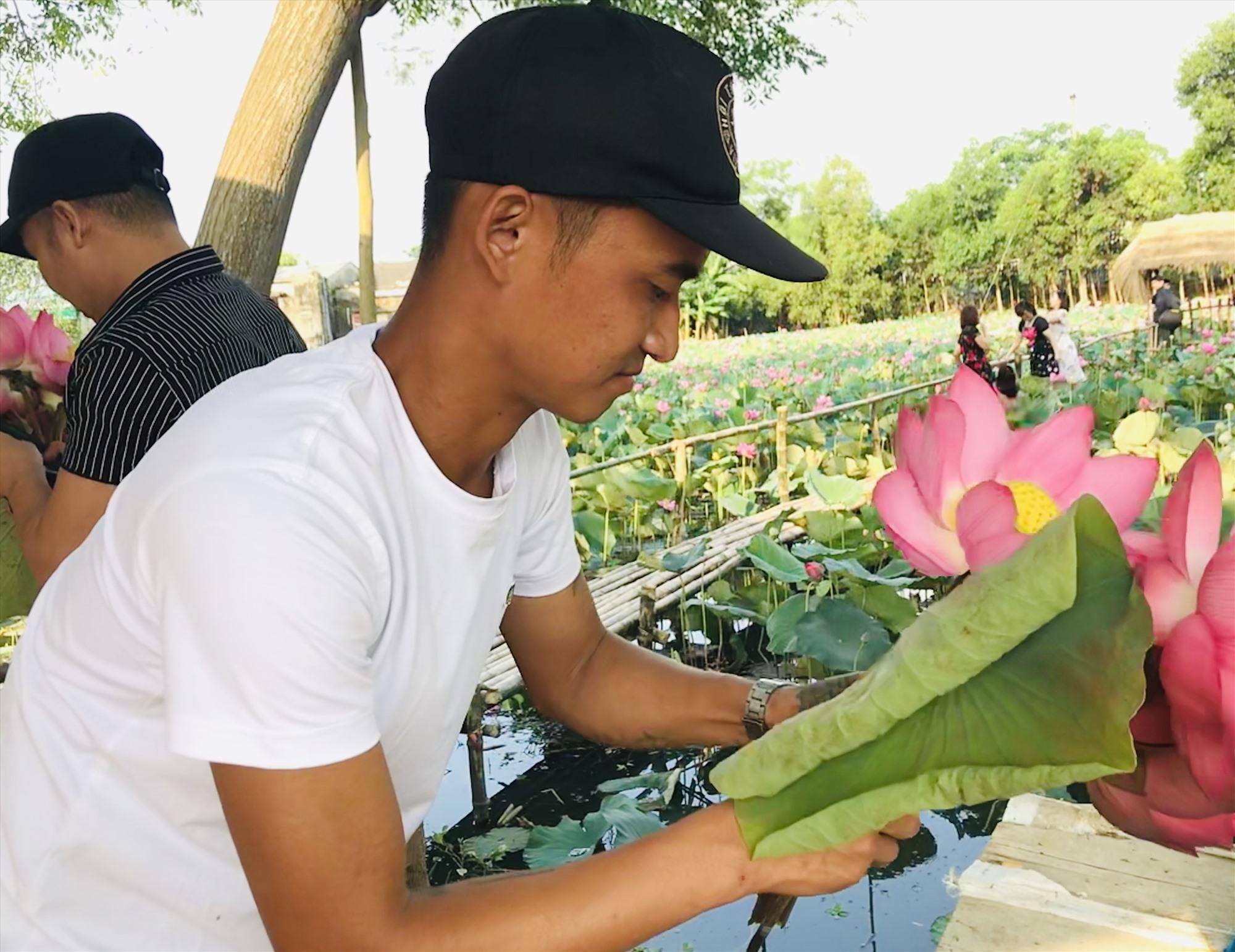 Anh Mai Chí Công (27 tuổi) khởi nghiệp với hồ sen rộng 1ha kết hợp du lịch ở thôn Nông Sơn 1, xã Điện Phước, Điện Bàn. Ảnh: C.N