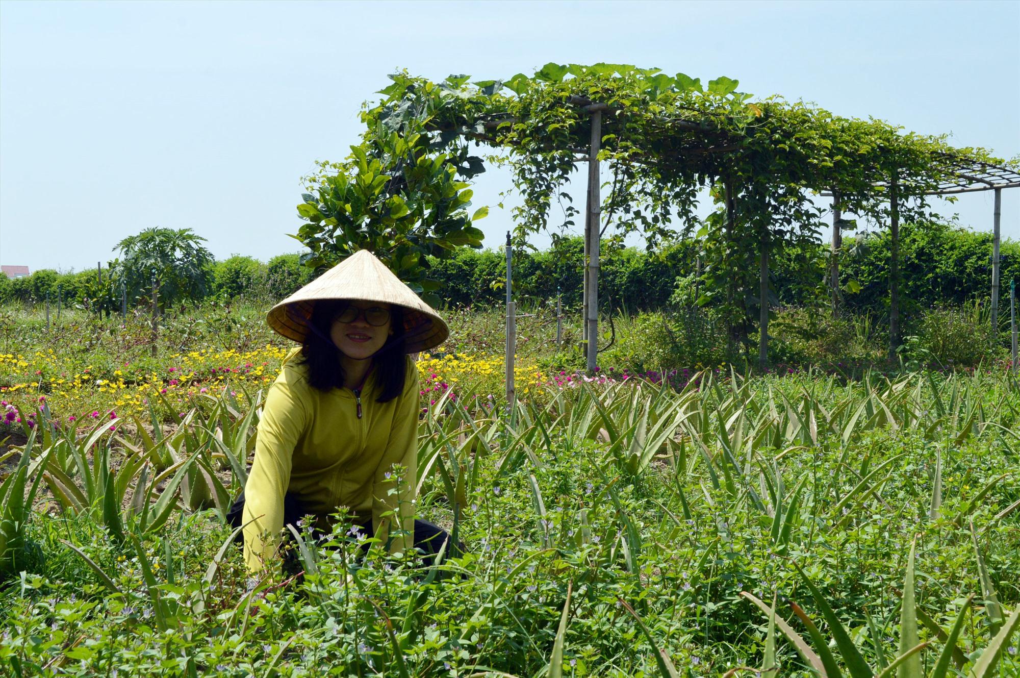 Trần Huỳnh Hải Yến với mô hình khởi nghiệp nông nghiệp xanh. Ảnh: V.L