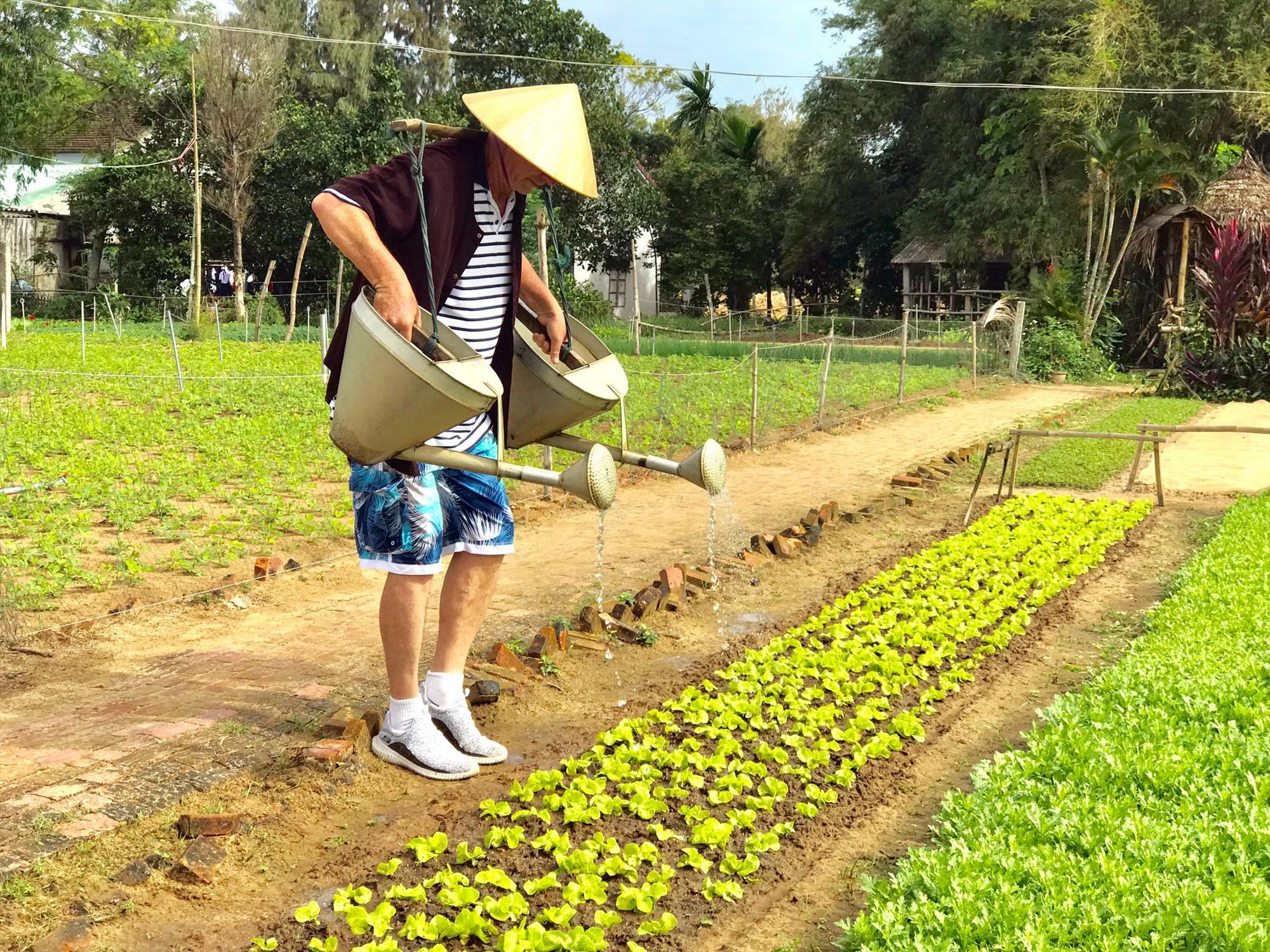 Làng rau Trà Quế cần cải tiến thêm sản phẩm du lịch nông nghiệp để thu hút du khách. Ảnh: H.S