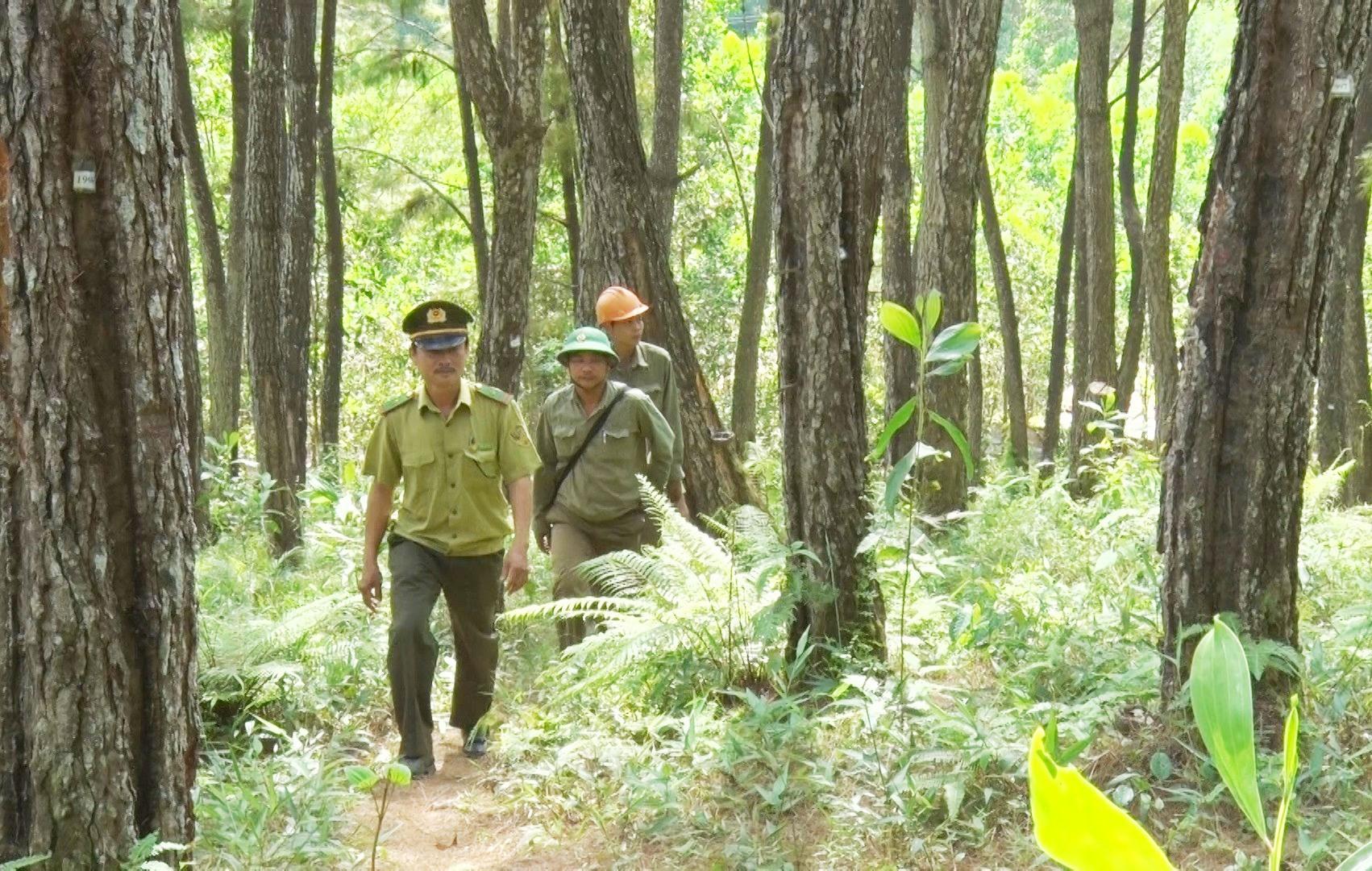 Để ngăn các mối nguy cơ dẫn đến cháy rừng, lực lượng kiểm lâm, bảo vệ rừng Tiên Phước thường xuyên tuần tra. Ảnh: Đ.Q