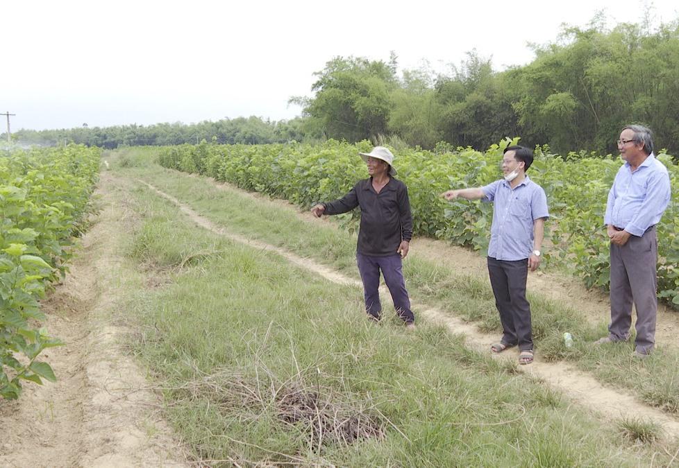 Ngoài cây ớt, trong hai năm qua người dân ở Duy Châu được hỗ trợ khôi phục diện tích trồng dâu, tăng quy mô nuôi tằm trong từng hộ gia đình. Ảnh: DUY BÌNH