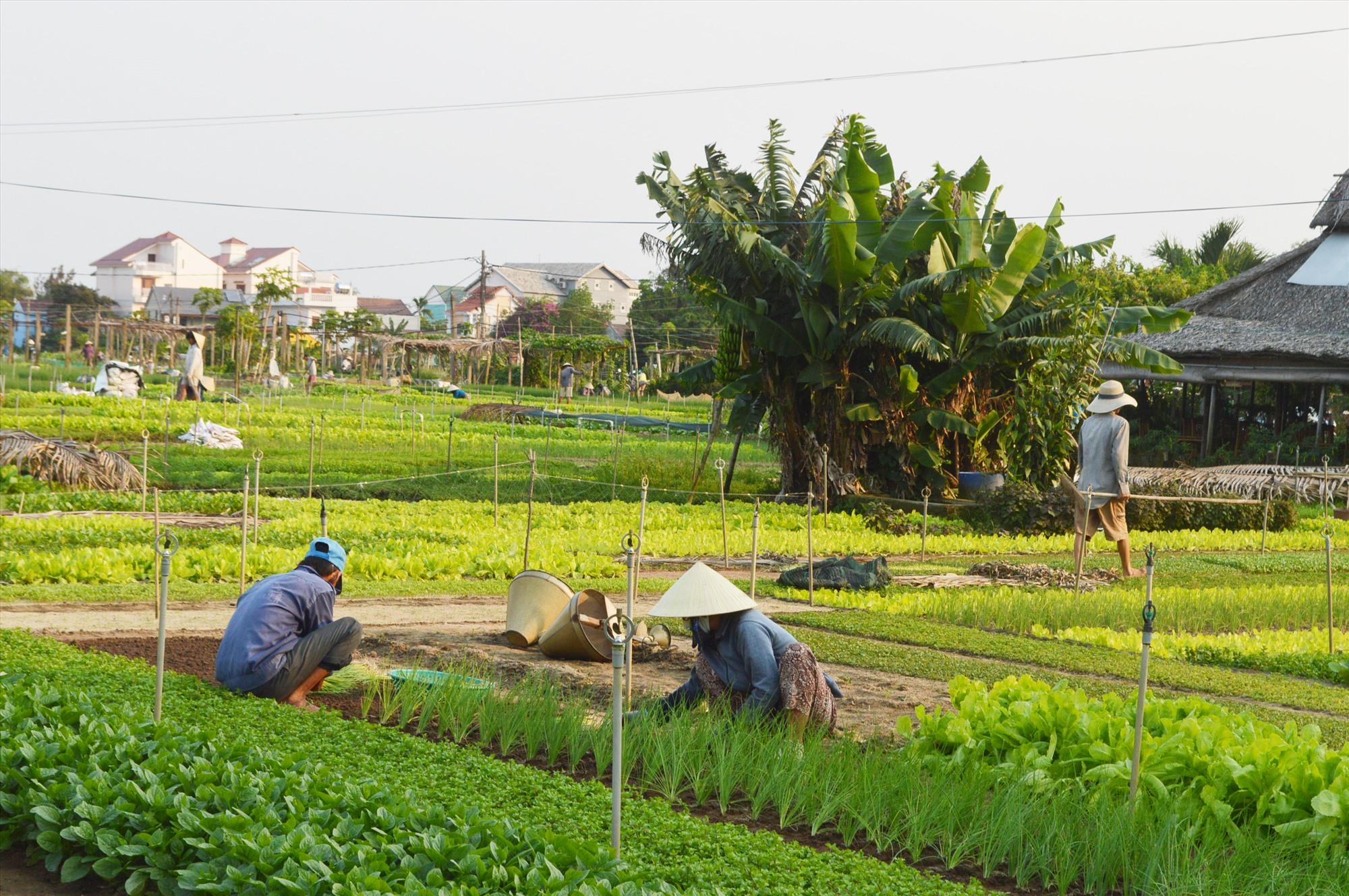 Xây dựng các sản phẩm khác biệt sẽ giúp sự canh tranh của du lịch Quảng Nam sau dịch tốt hơn.
