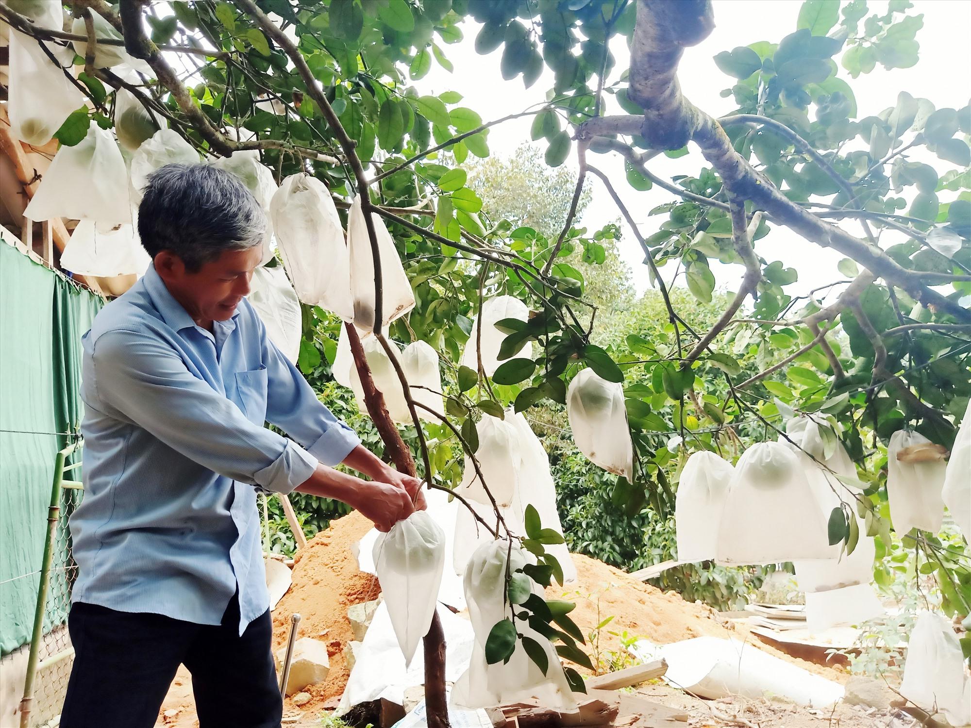 Những mùa màng cây trái ở xóm Quờn. Ảnh: H.LIÊN