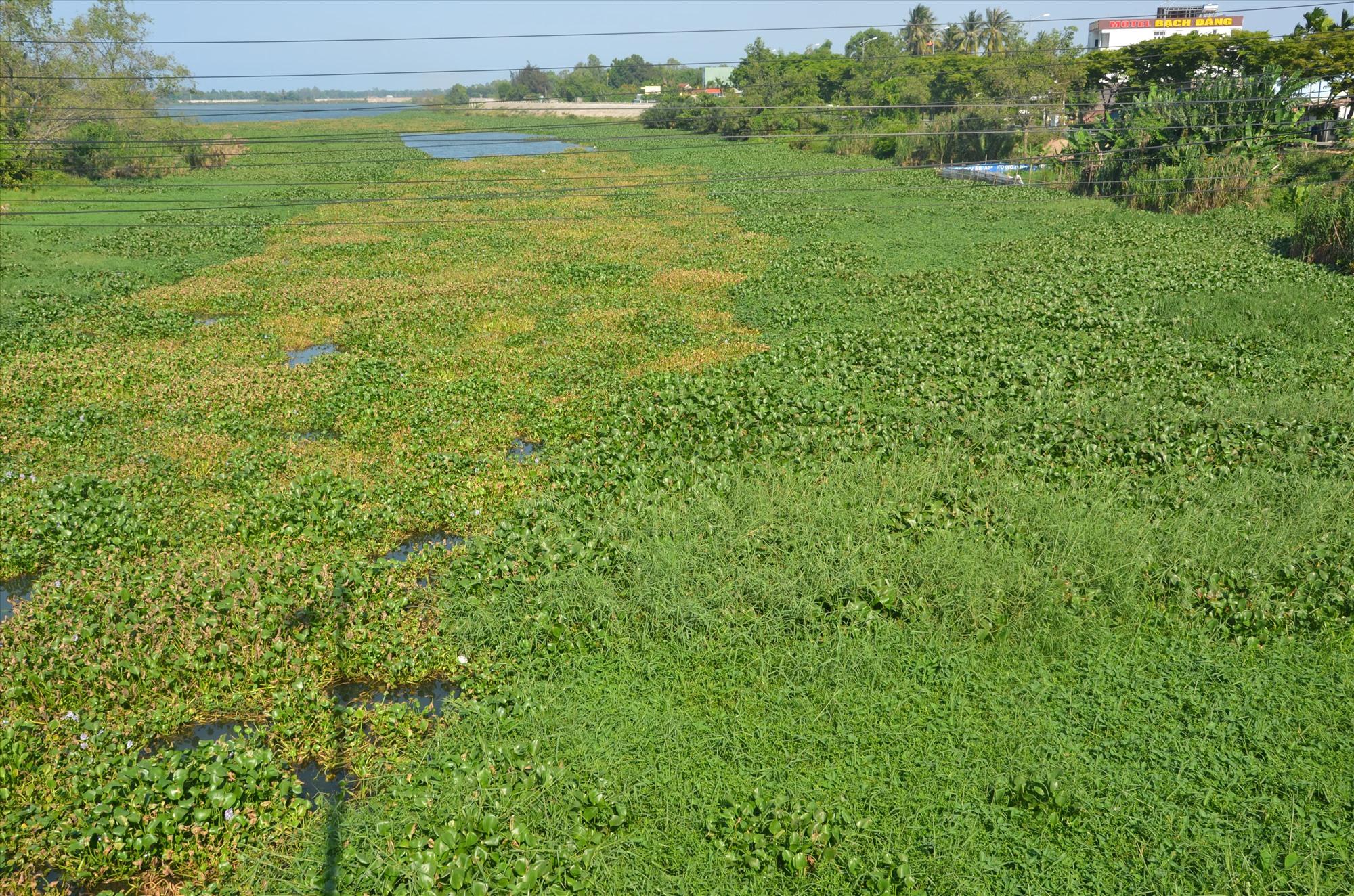 Sông Tam Kỳ bị ô nhiễm do nhiễm mặn tự nhiên. Ảnh: T.H