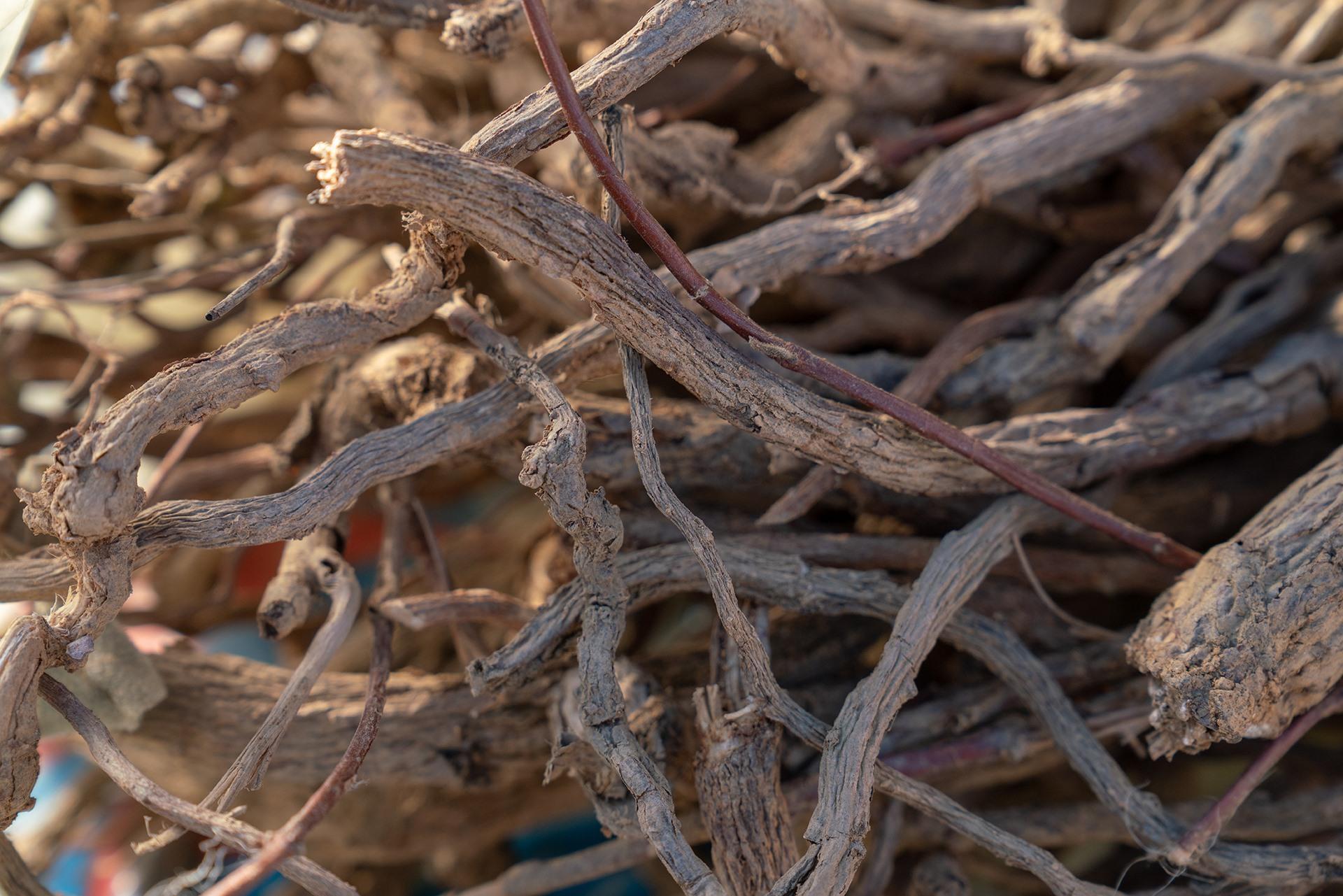 Củ cây Hà Thủ Ô (cây sâm đất) được giá cao.