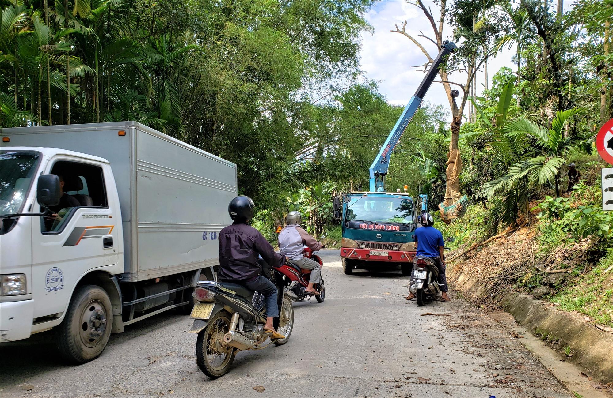 Xe tải cẩu cây xanh gây ách tắc giao thông trên tuyến quốc lộ 40B đoạn qua xã Trà Tân, huyện Bắc Trà My. Ảnh: HOÀI AN