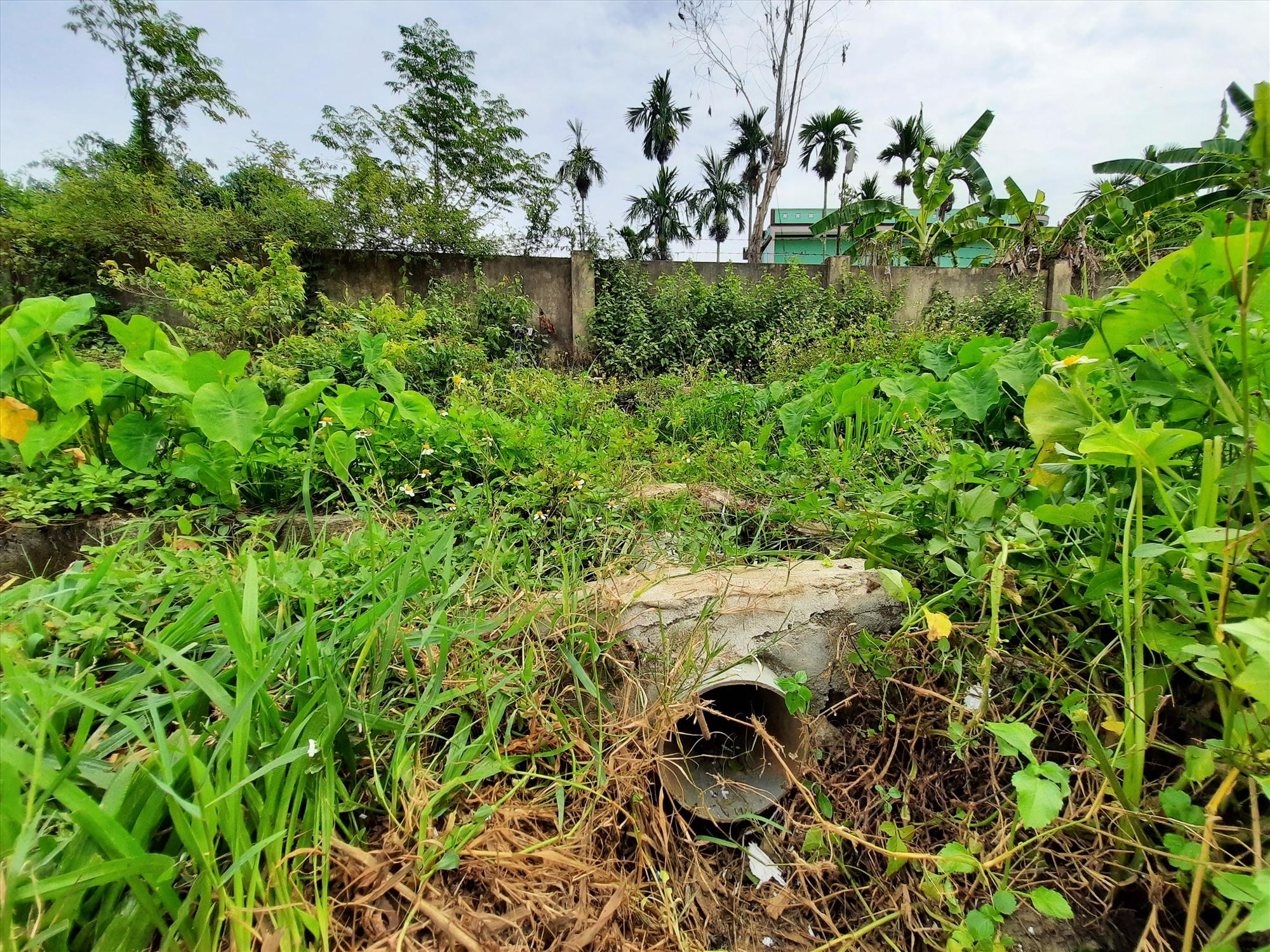 Một ống xả nước thải ra mương tưới tiêu nối từ bên trong trang trại nuôi gà Văn Học ra bên ngoài. Ảnh: Đ. Q
