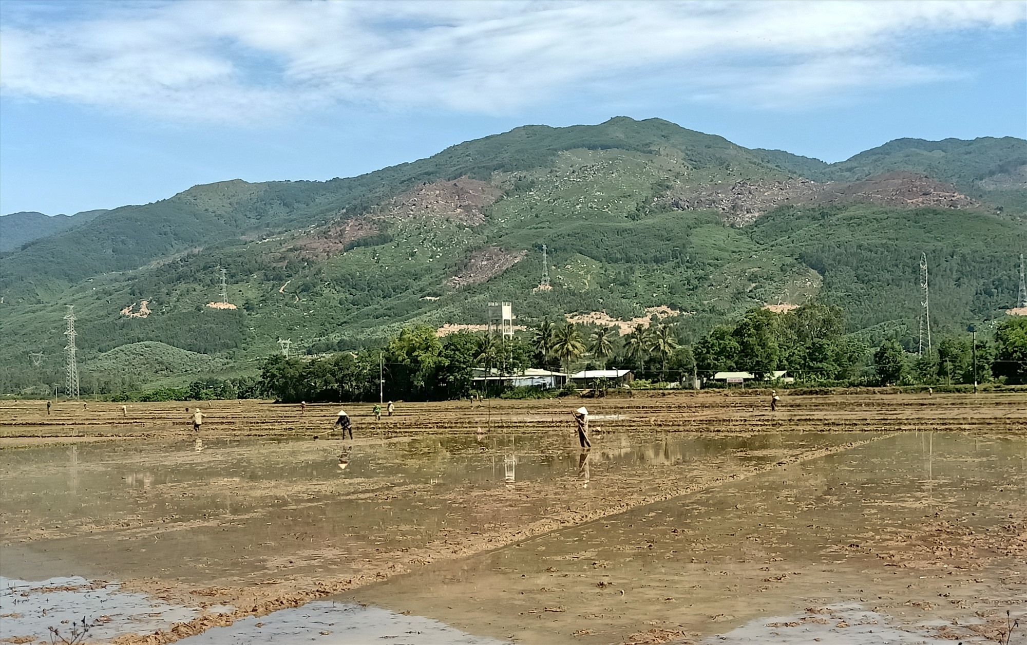 Nông dân Đại Quang, Đại Lộc đã hoàn thành công tác gieo sạ vụ hè thu. Ảnh: H.LIÊN