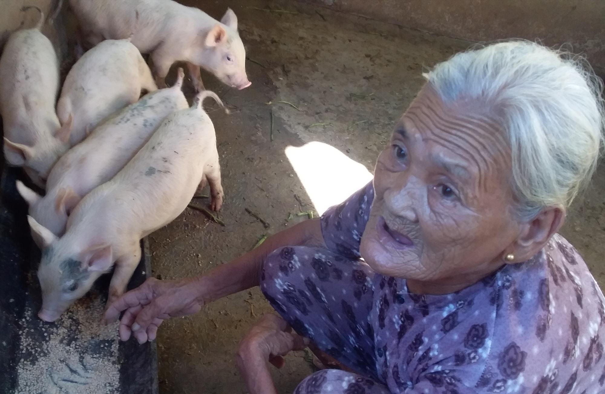 Gia đình bà Huỳnh Thị Trà vừa mua 5 con heo để tái đàn với giá khá cao. Ảnh: G.B