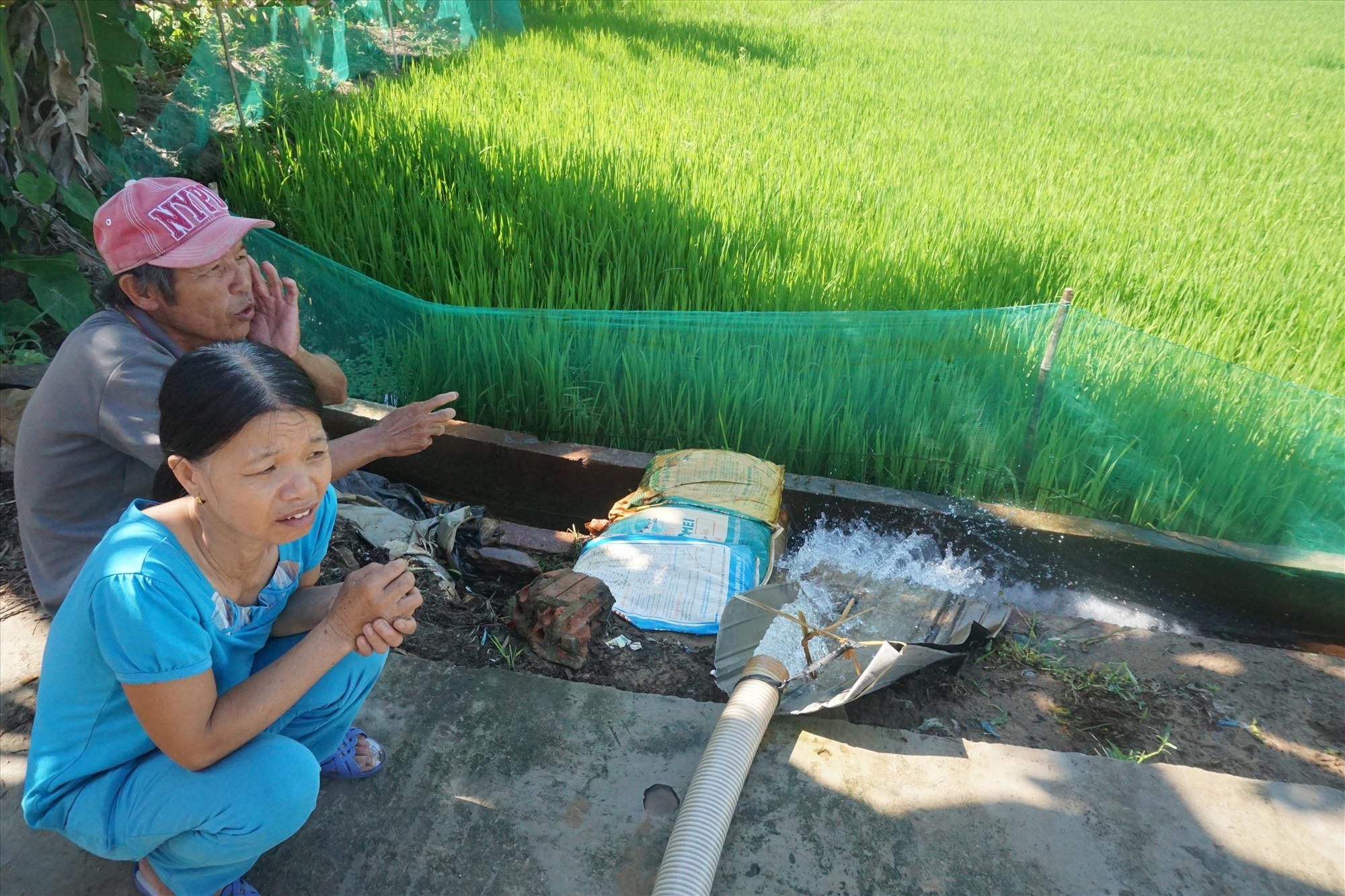 Từ ngày có được những trạm bơm dẫn nước ra ruộng, bà con nông dân ở đây đỡ vất vả.