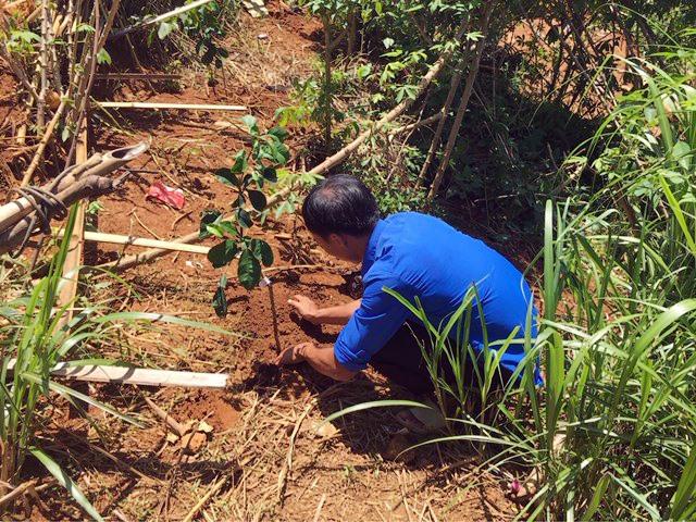 Huyện đoàn Nam Trà My giúp thanh niên khởi nghiệp trồng cây ăn quả. Ảnh: M.H