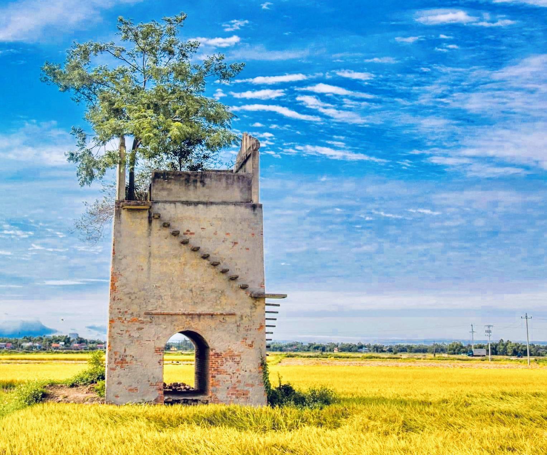 Lò gạch cũ và cánh đồng lúa chín đẹp mơ màng ở vùng đông Duy Xuyên. Ảnh: H.S