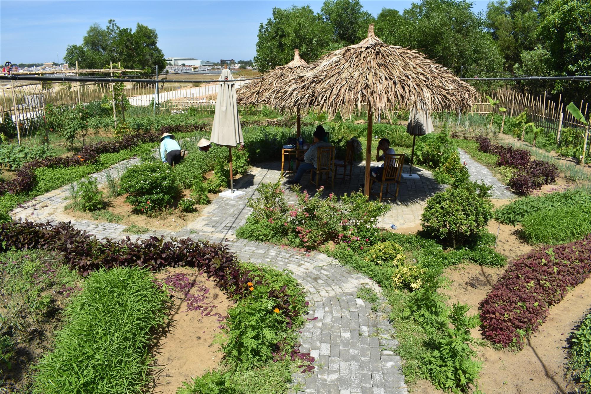 Tháng 7 này khu vườn sinh thái sẽ mở cửa đón các em học sinh khuyết tật. Ảnh: H.PHƯƠNG