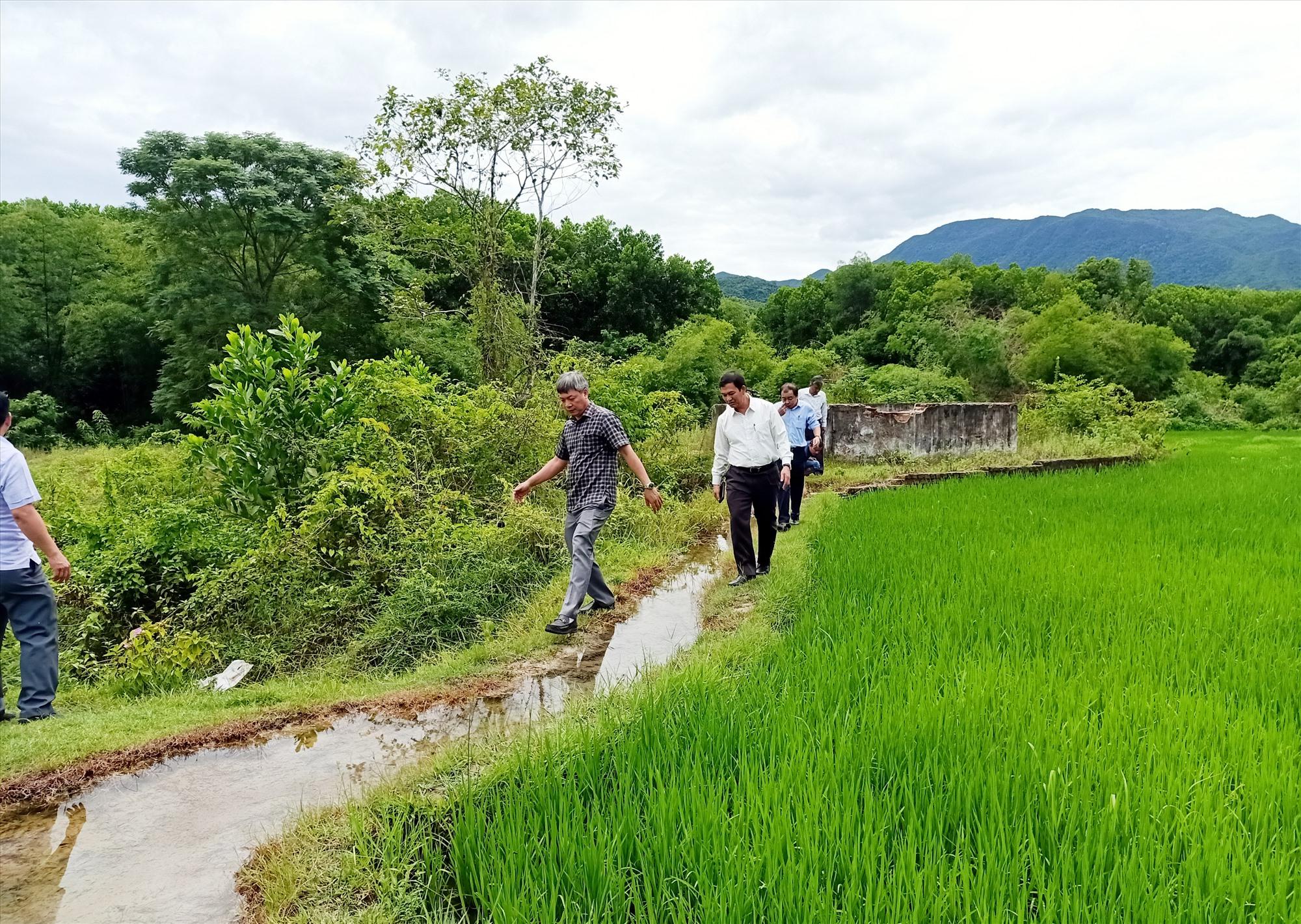 Phó Chủ tịch UBND tỉnh Hồ Quang Bửu khảo sát khu suối nước nóng Tây Viên, xã Sơn Viên, Nông Sơn. Ảnh: HOÀNG LIÊN
