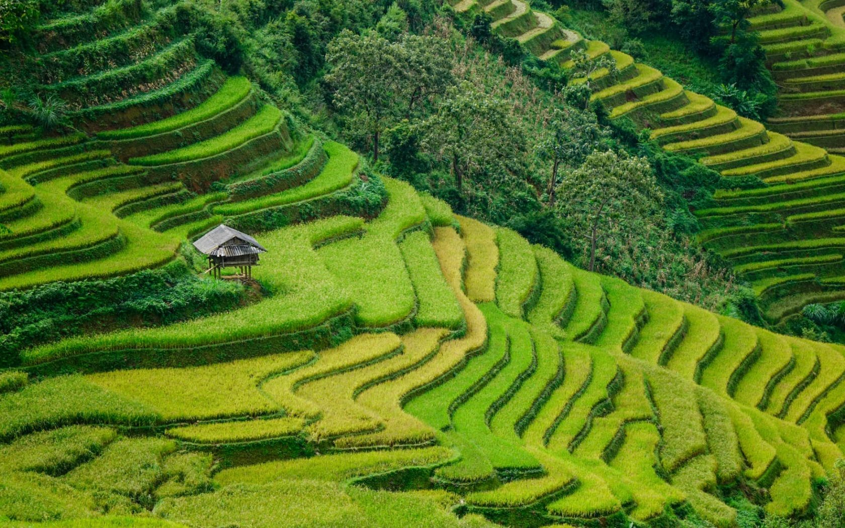 Terraced fields covered with fog in the early morning or with the green colour of rice and maize when the sun rises associated with the cone-shaped mountains are always impressive to visitors. Besides, ethnic villages in Sapa where traditional lifestyles are being maintained are also attractive to visitors.