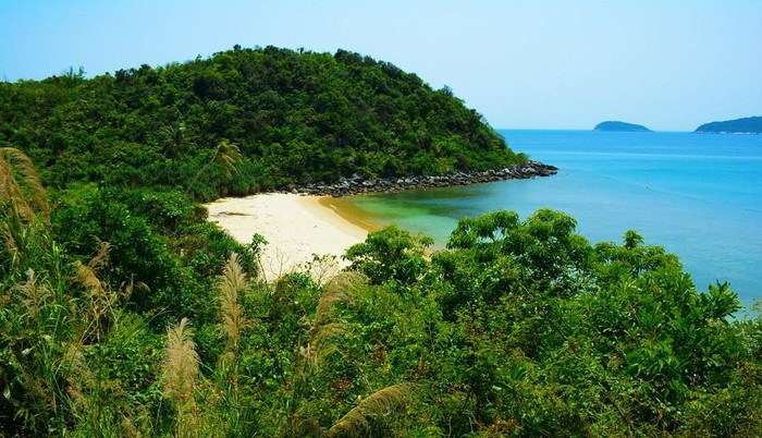 A pristine beach surrounded by a jungle