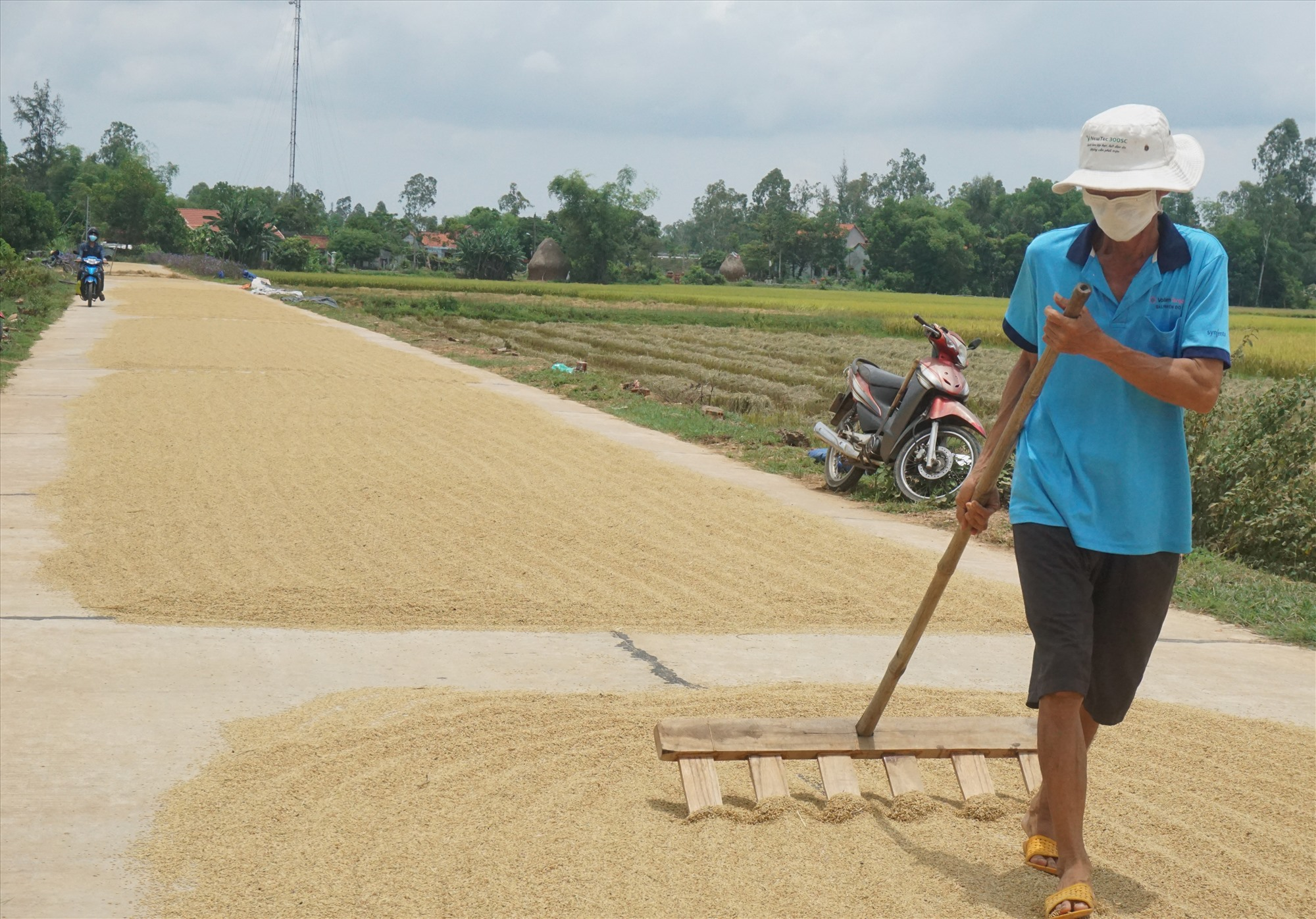 Nông dân Bình Chánh phơi lúa thu hoạch vụ hè thu 2020. Ảnh: G.B