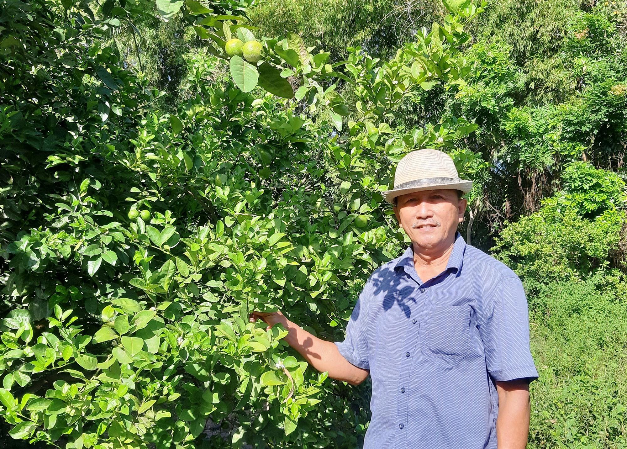 Nhiều mô hình vườn mẫu trồng các loại cây ăn quả, rau đậu và hoa cây cảnh ở Duy Xuyên cho hiệu quả kinh tế cao. Ảnh: T.S