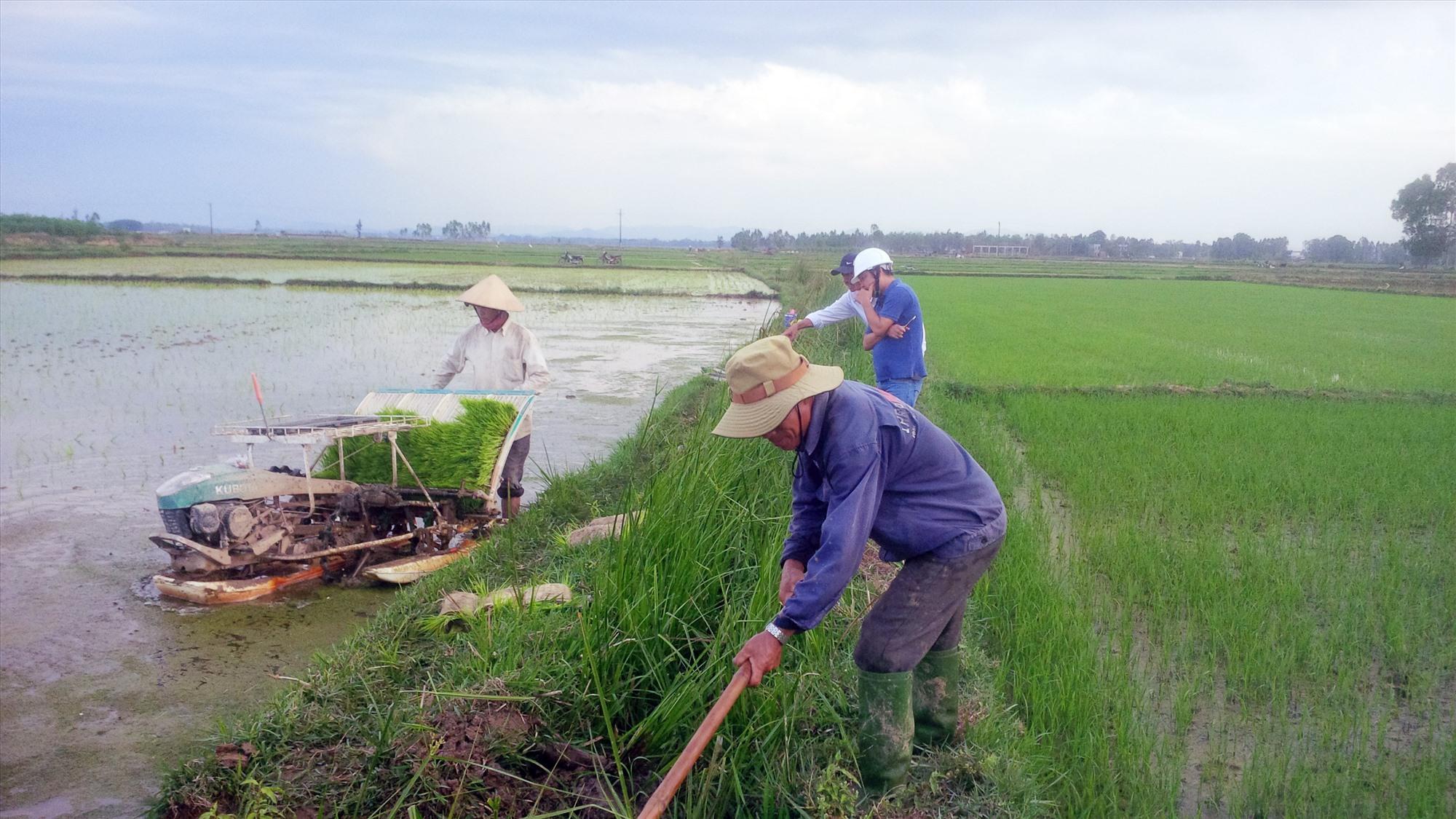 Nhanh chóng hiện đại hóa nền sản xuất nông nghiệp là một trong những mục tiêu của Quảng Nam trong thời gian tới. Ảnh: H.Q