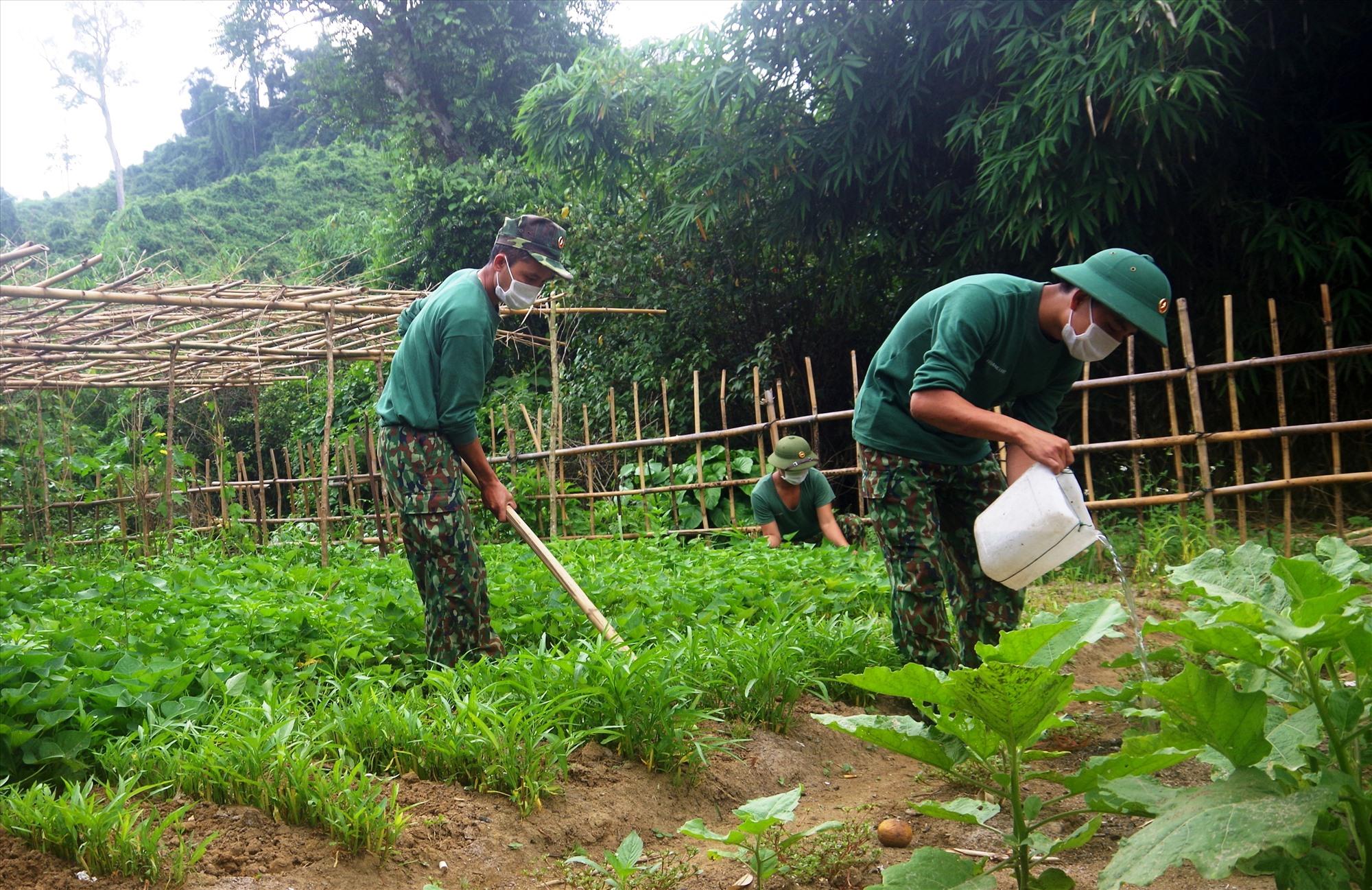 Tăng gia sản xuất để cải thiện đời sống, tạo nguồn rau sạch tại chỗ cho bữa ăn hàng ngày. Ảnh: T.N