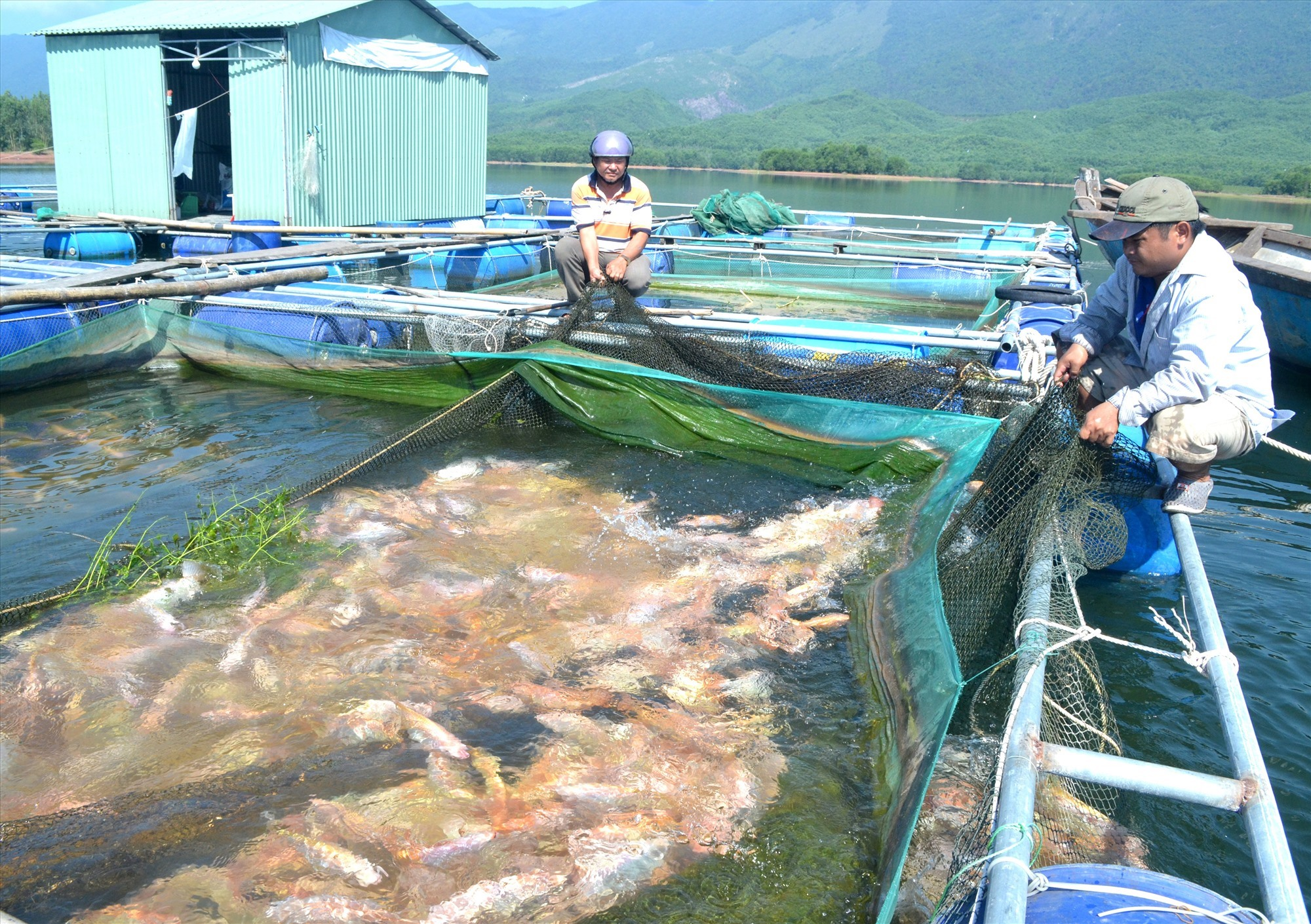 Difficulties in freshwater fish farming due to climate change