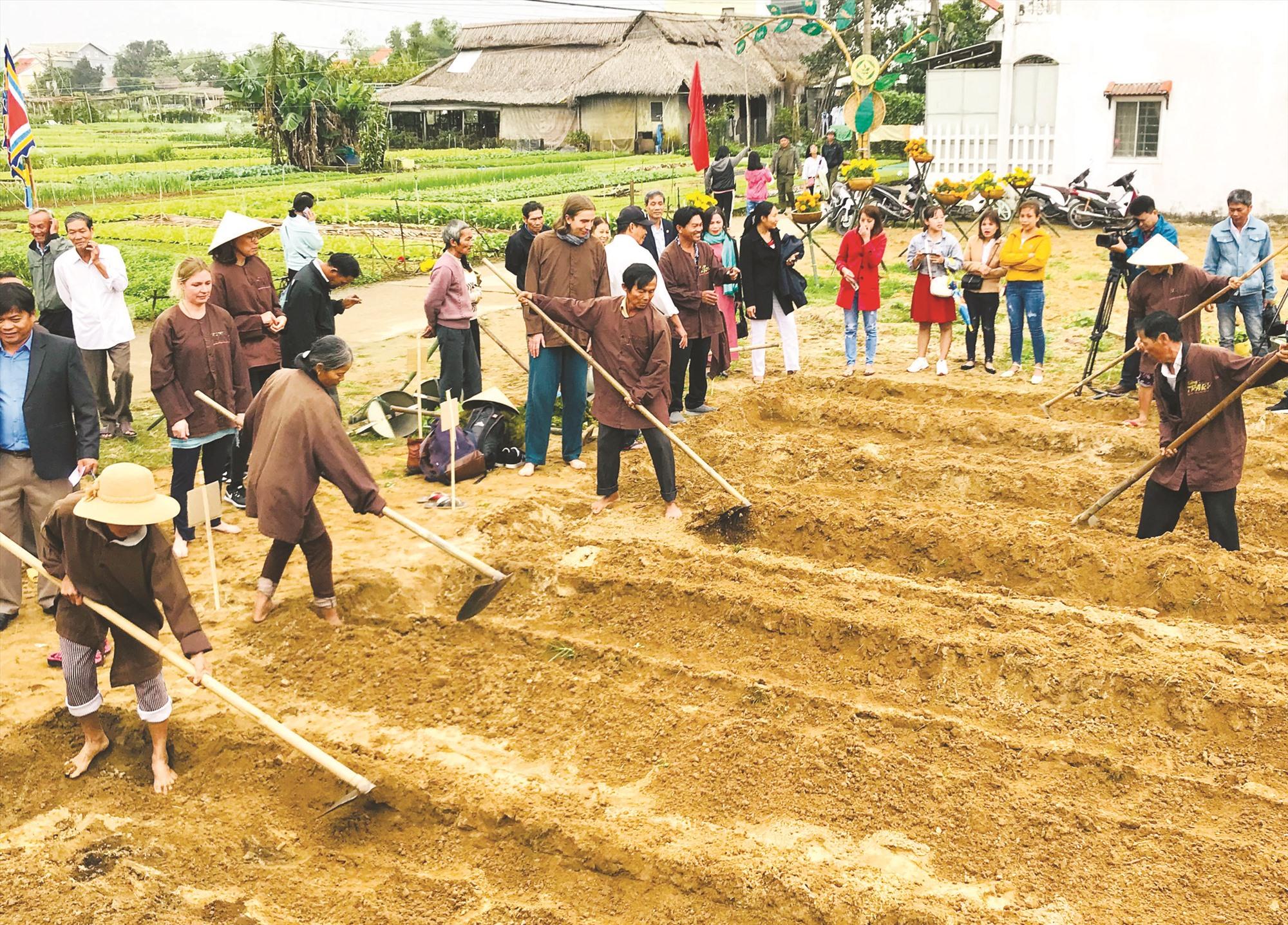 Du khách trải nghiệm làm nông nghiệp tại Hội An. Ảnh: QUỐC TUẤN