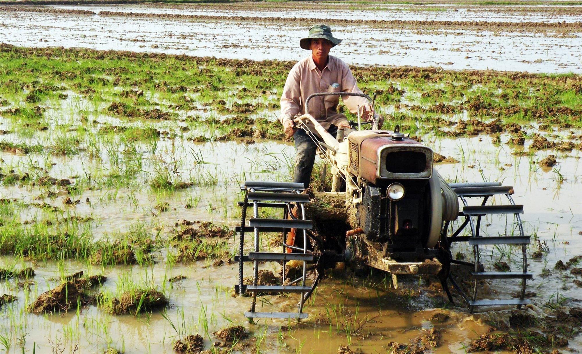 Cơ giới hóa sản xuất nông nghiệp hàng hóa ở huyện Thăng Bình đem lại thu nhập khá cho nông dân. Ảnh: VIỆT QUANG