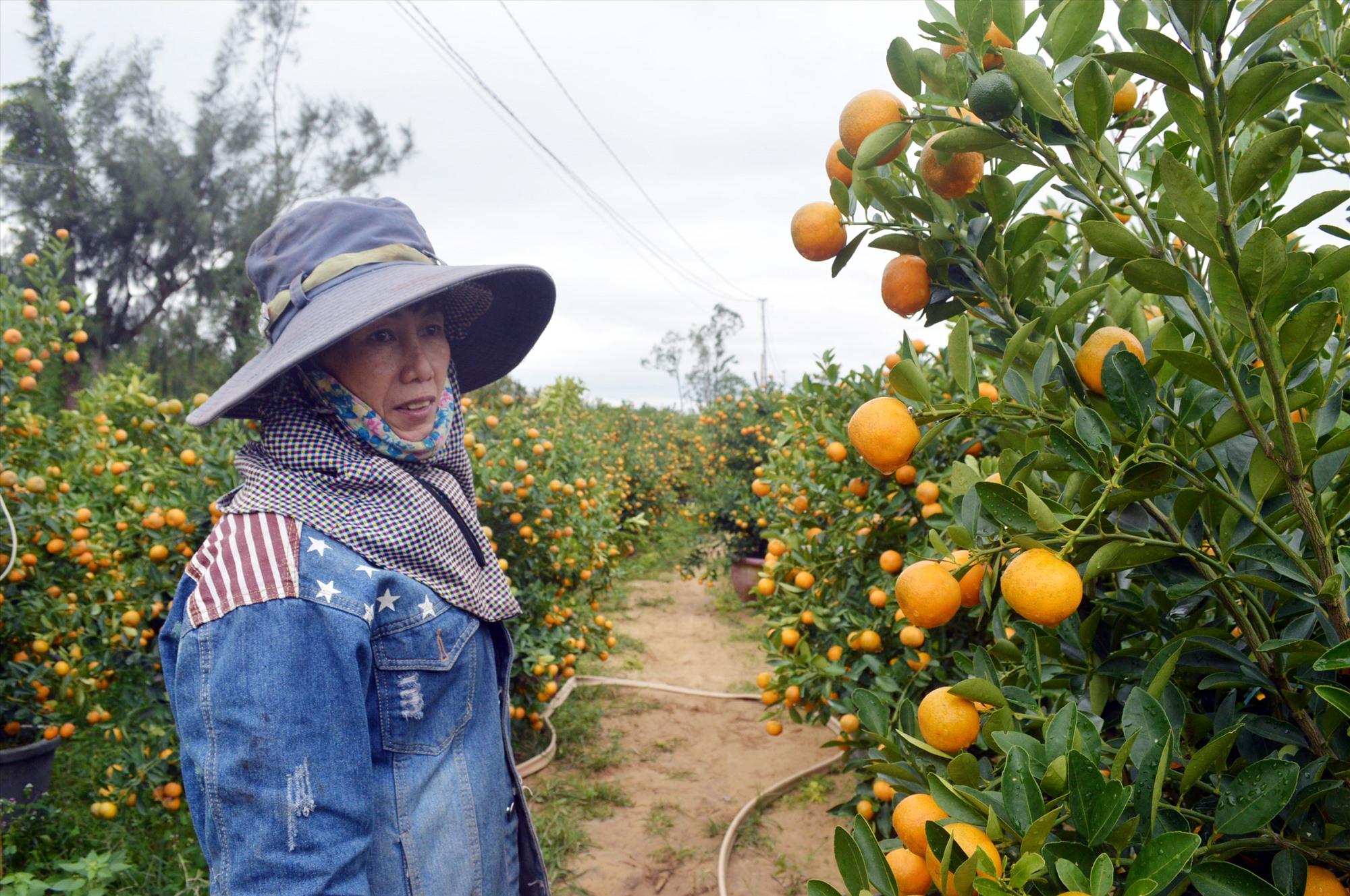 Bà Nguyễn Thị Hà lo lắng vụ quật tết này.