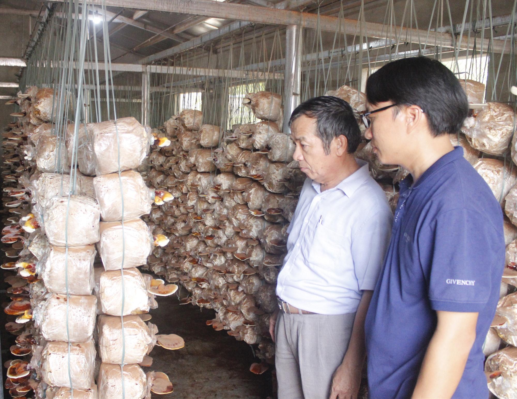 Anh Hải (áo xám) và cơ sở sản xuất nấm. Ảnh: VĂN PHIN