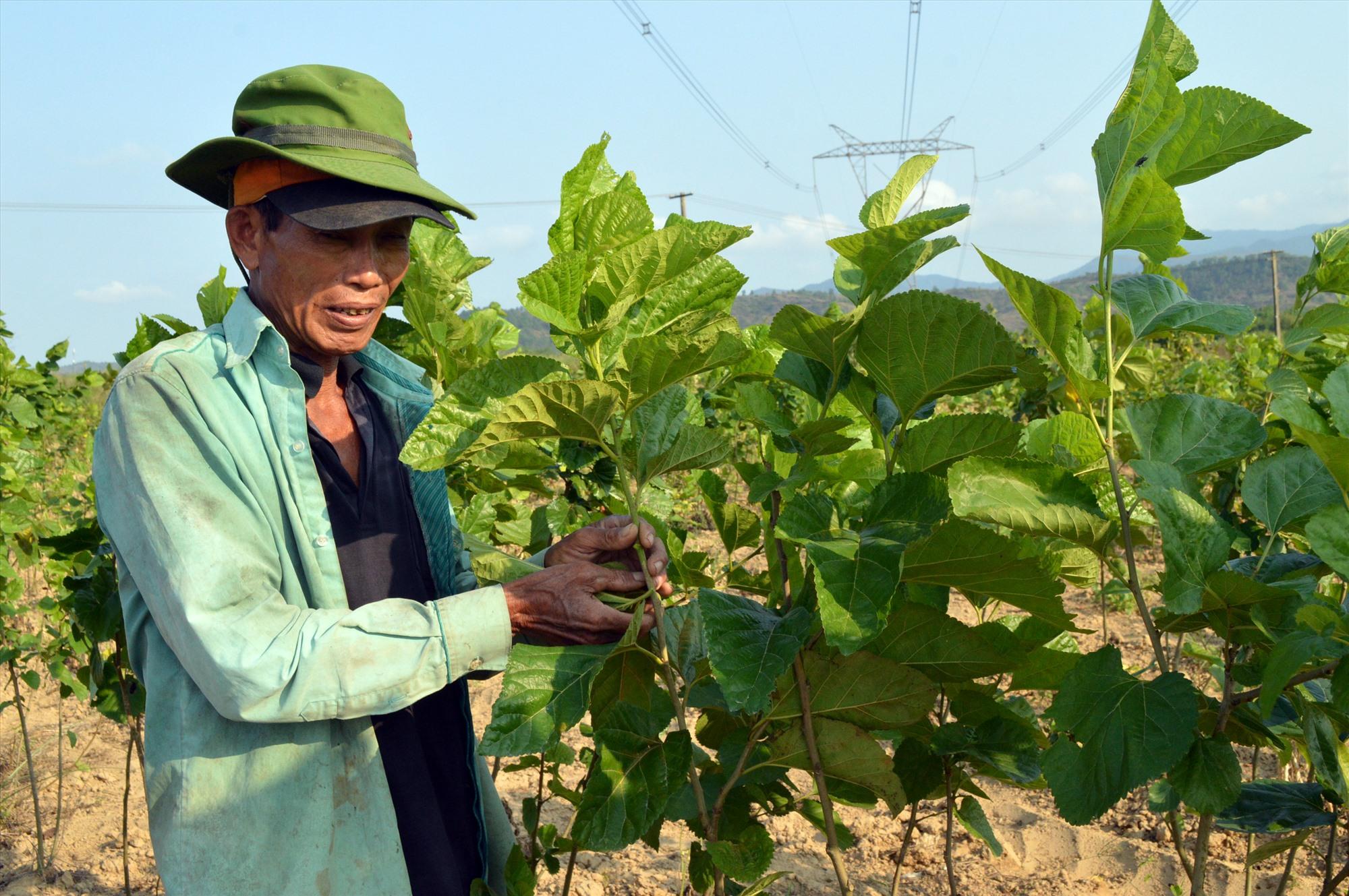 """Việc triển khai dự án """"Dòng sông lụa"""" không chỉ khôi phục nguồn nguyên liệu cho nghề dâu tằm mà còn góp phần phát triển du lịch. Ảnh: V.L"""