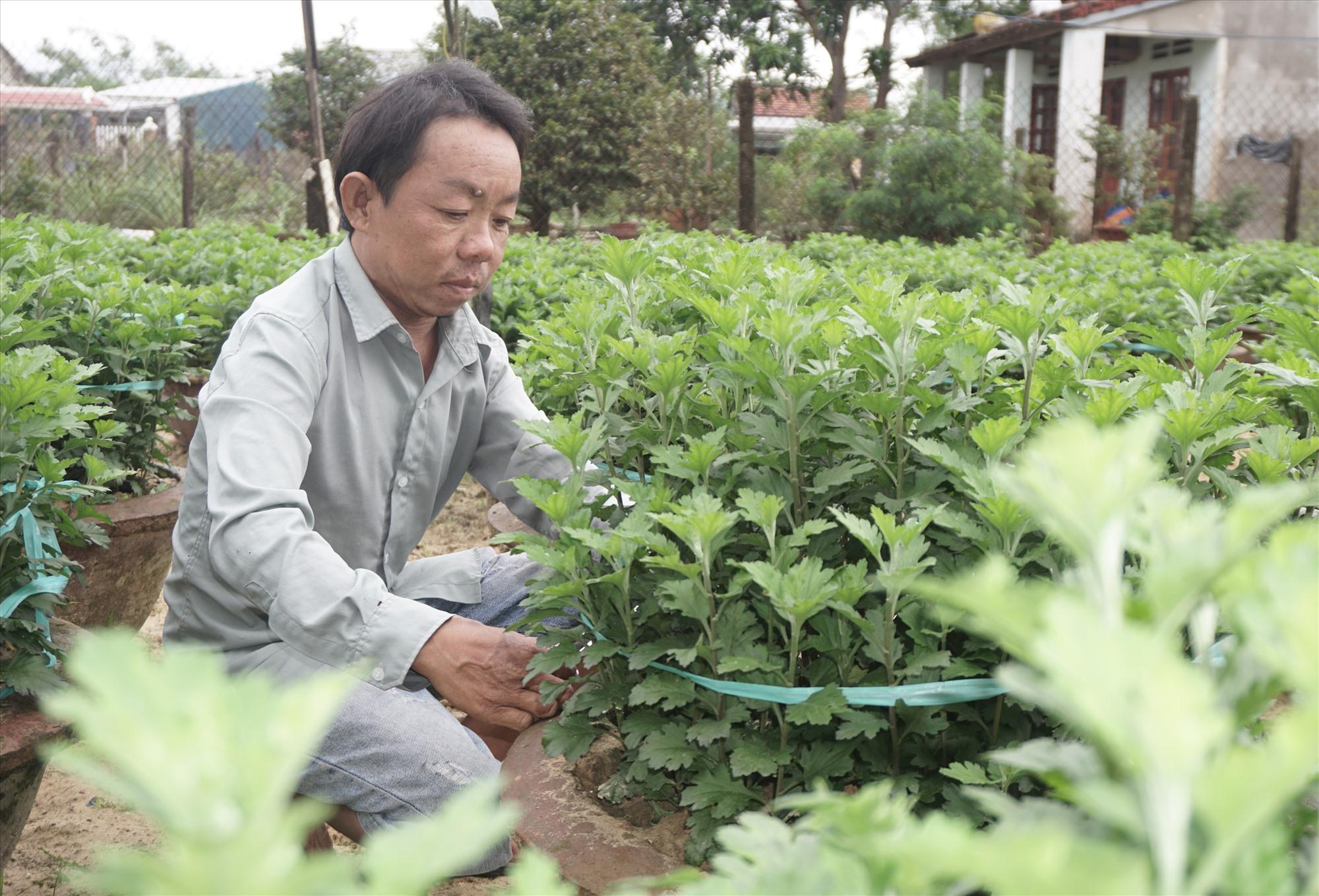 Anh Võ Như Trọng (ở khối phố Quảng Lăng A) tỉa lá cúc hư hại, chuẩn bị đóng cọc vào chậu. Ảnh: N.Trang