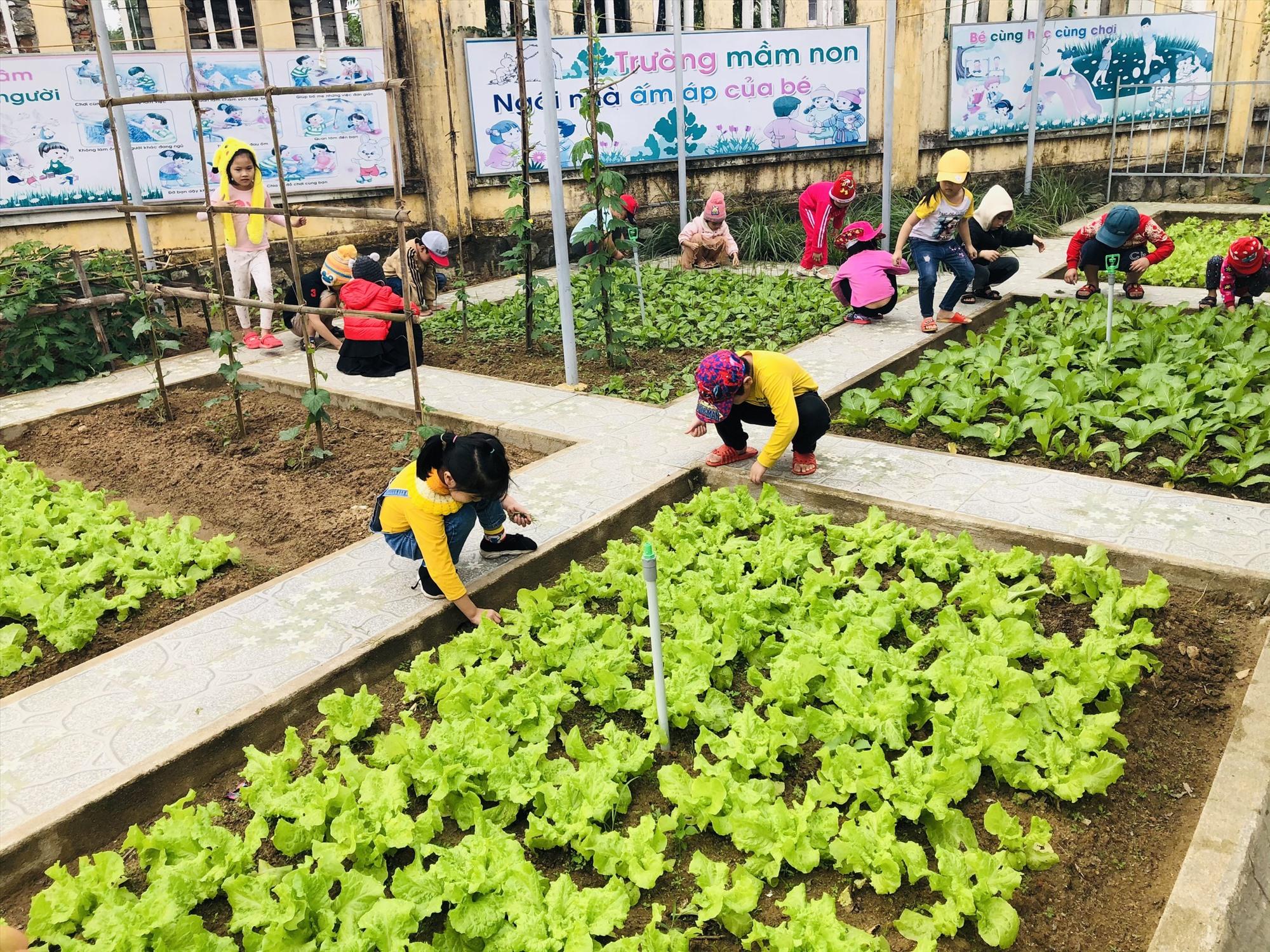 Học sinh Trường Mẫu giáo Bình Minh (Tam Kỳ) trải nghiệm chăm sóc rau trong vườn trường. Ảnh: P.THẢO