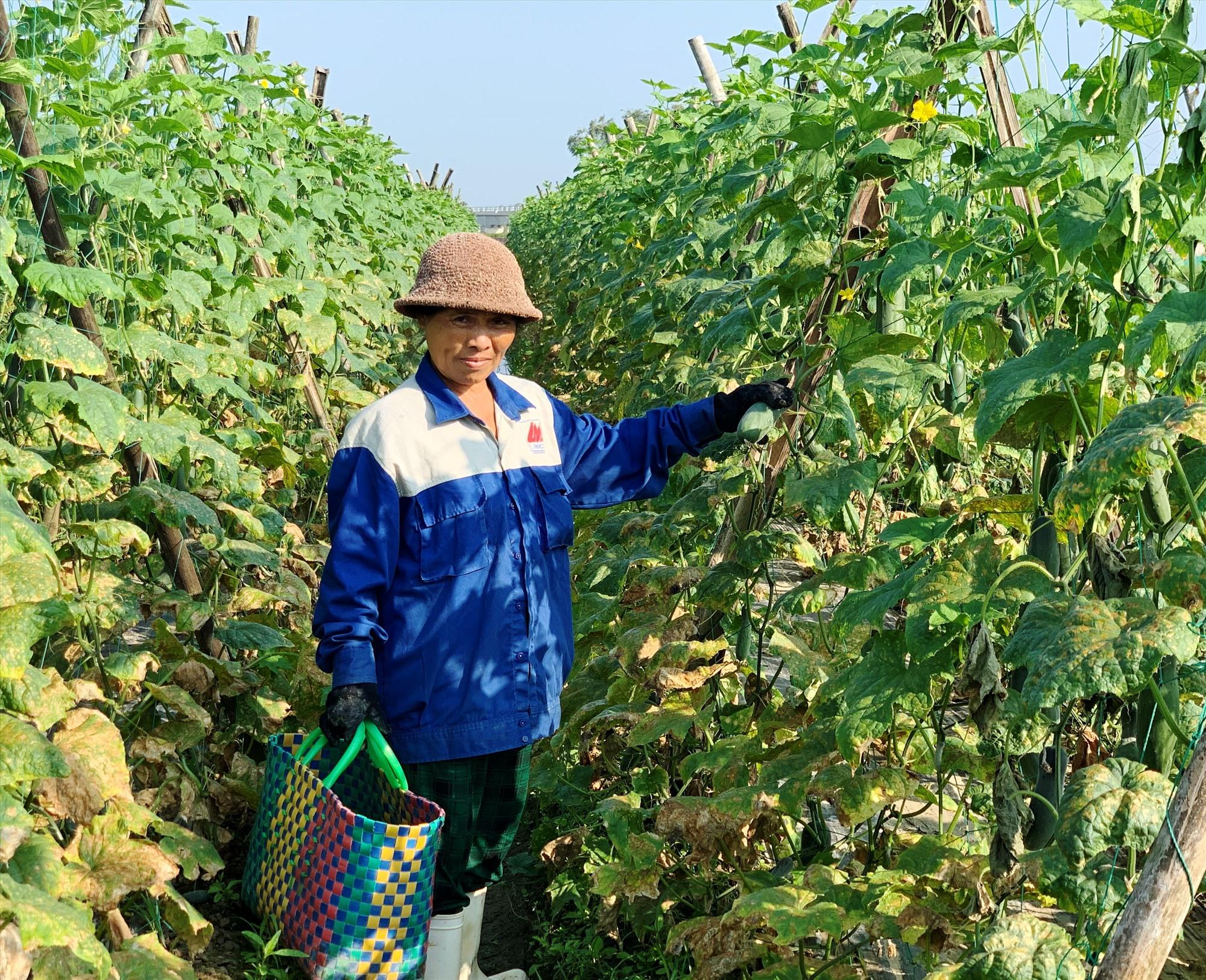 Vắng bóng tư thương, nông dân ở nhiều vùng trồng rau củ quả lớn của tỉnh phải thu hái và mang ra chợ bán với mức giá khá thấp. Ảnh: N.T
