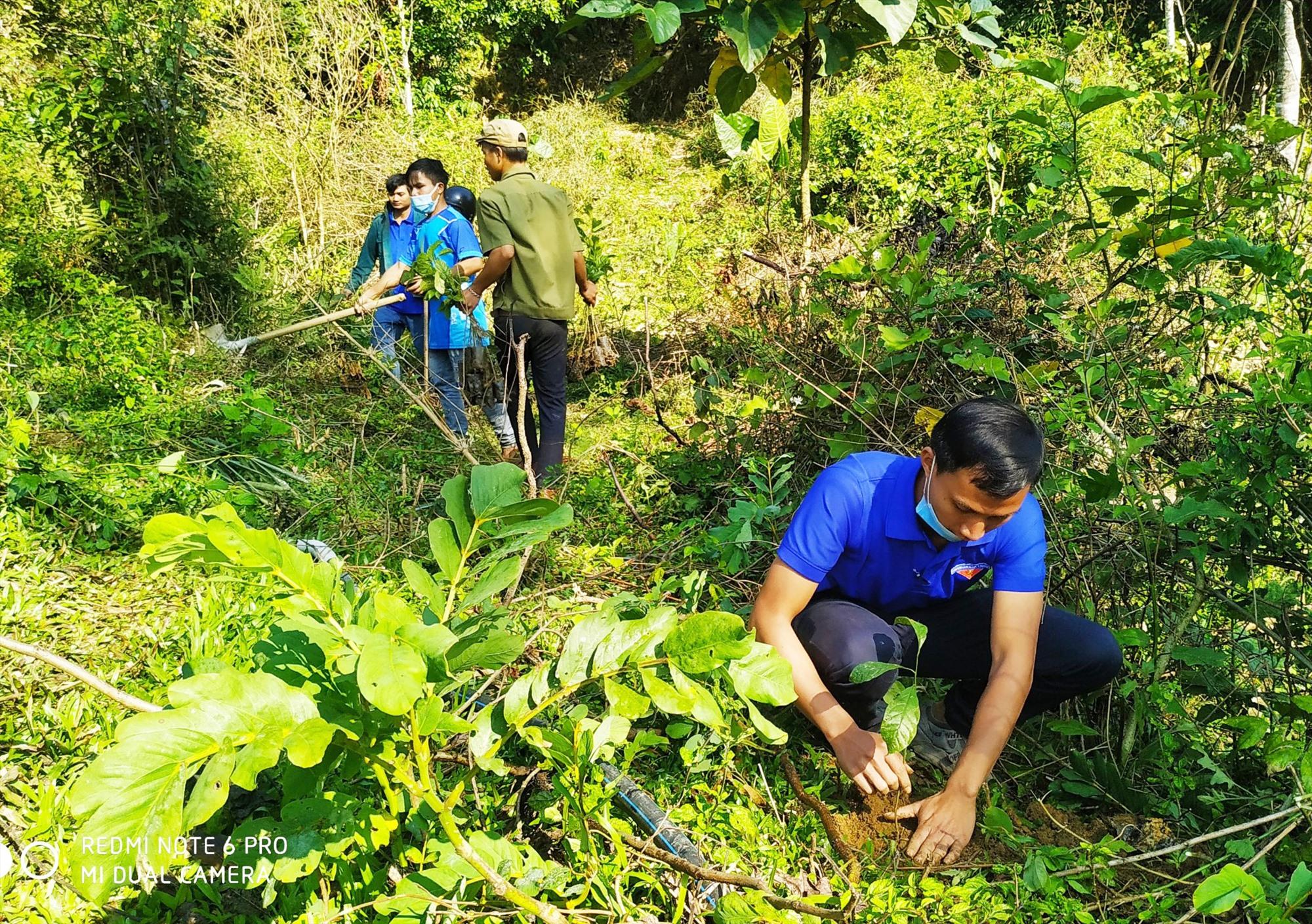 Đoàn viên thanh niên Nam Trà My tổ chức Tết trồng cây tại làng Cheng Tong, thôn 1, Trà Cang. Ảnh: V.K