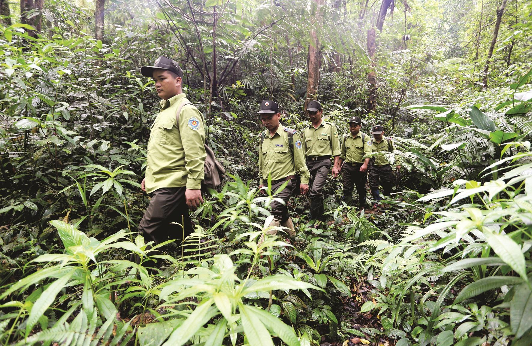 Nhân viên khu bảo tồn đi vào vừng phá bẫy, mỗi chuyến đi kéo dài khoảng 8 ngày. Họ mang theo lương thực, thực phẩm, dựng lán trại ở trong rừng.