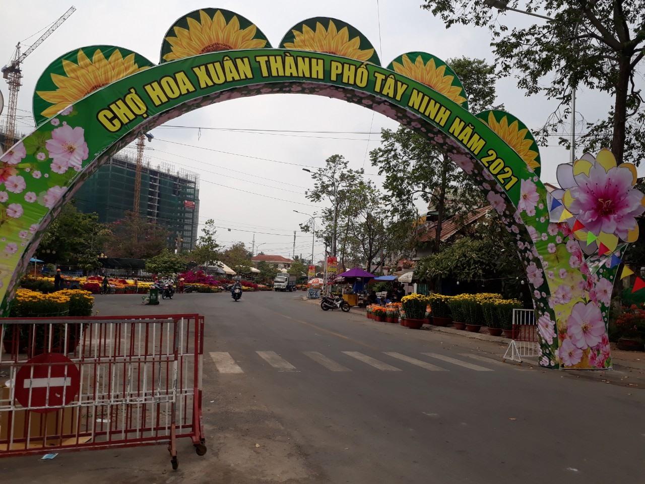 Mai Đại Lộc có bán ở chợ hoa xuân Tây Ninh. Ảnh: T.Q.T