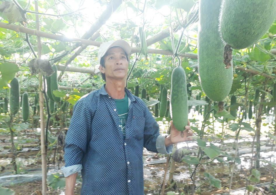Ông Tâm chỉ giàn bí đao xanh của gia đình ra sai quả nhưng giá thành chỉ có 2.000 đồng/kg nên rất khó bán.