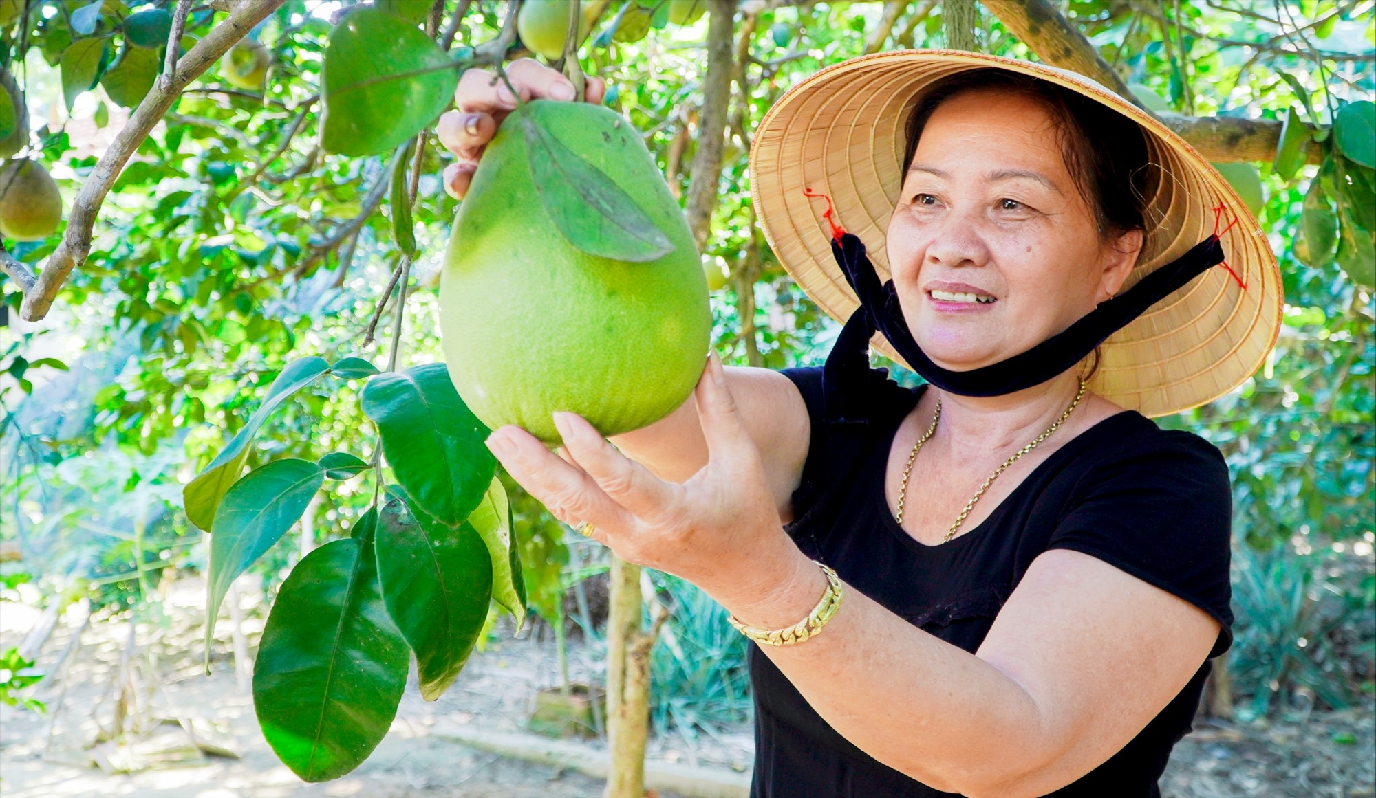 Nhiều mô hình kinh tế vườn ở làng Đại Bình (Quế Trung, Nông Sơn) cho hiệu quả kinh tế cao. Ảnh: S.A