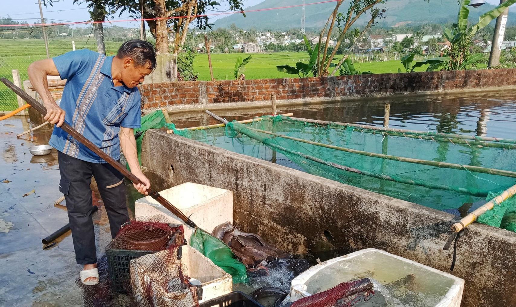 Một mô hình nuôi cá nước ngọt của nông dân xã Bình Lâm. Ảnh: VĂN MINH
