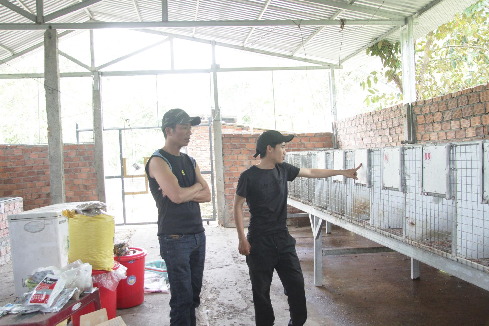 Huỳnh Viên Mãn nuôi chồn khởi nghiệp