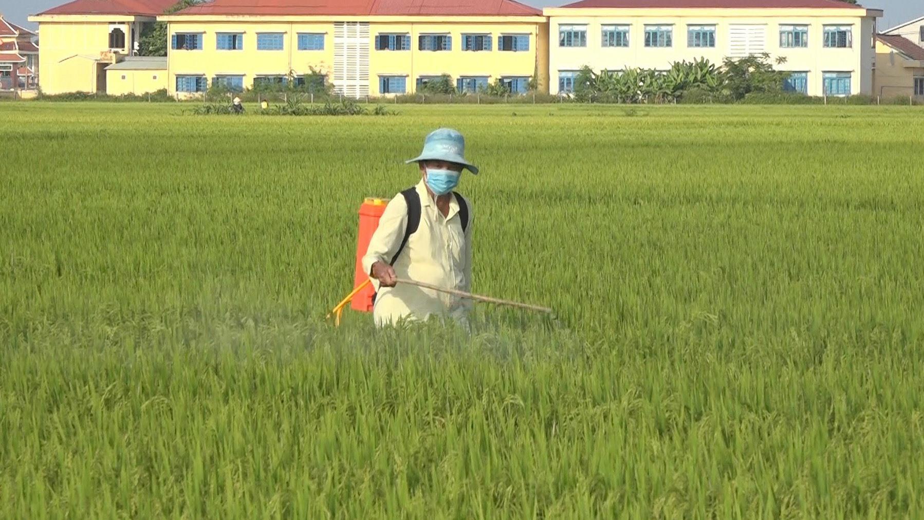 Nông dân Thăng Bình phun thuốc phòng trừ sâu bệnh. Ảnh: M.T