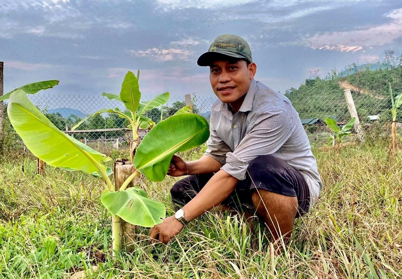Ngoài chăn nuôi heo cỏ địa phương, anh Zơrâm Đà còn mở rộng trồng chuối, nuôi cỏ voi xanh... phát triển kinh tế. Ảnh: LƯU HƯƠNG