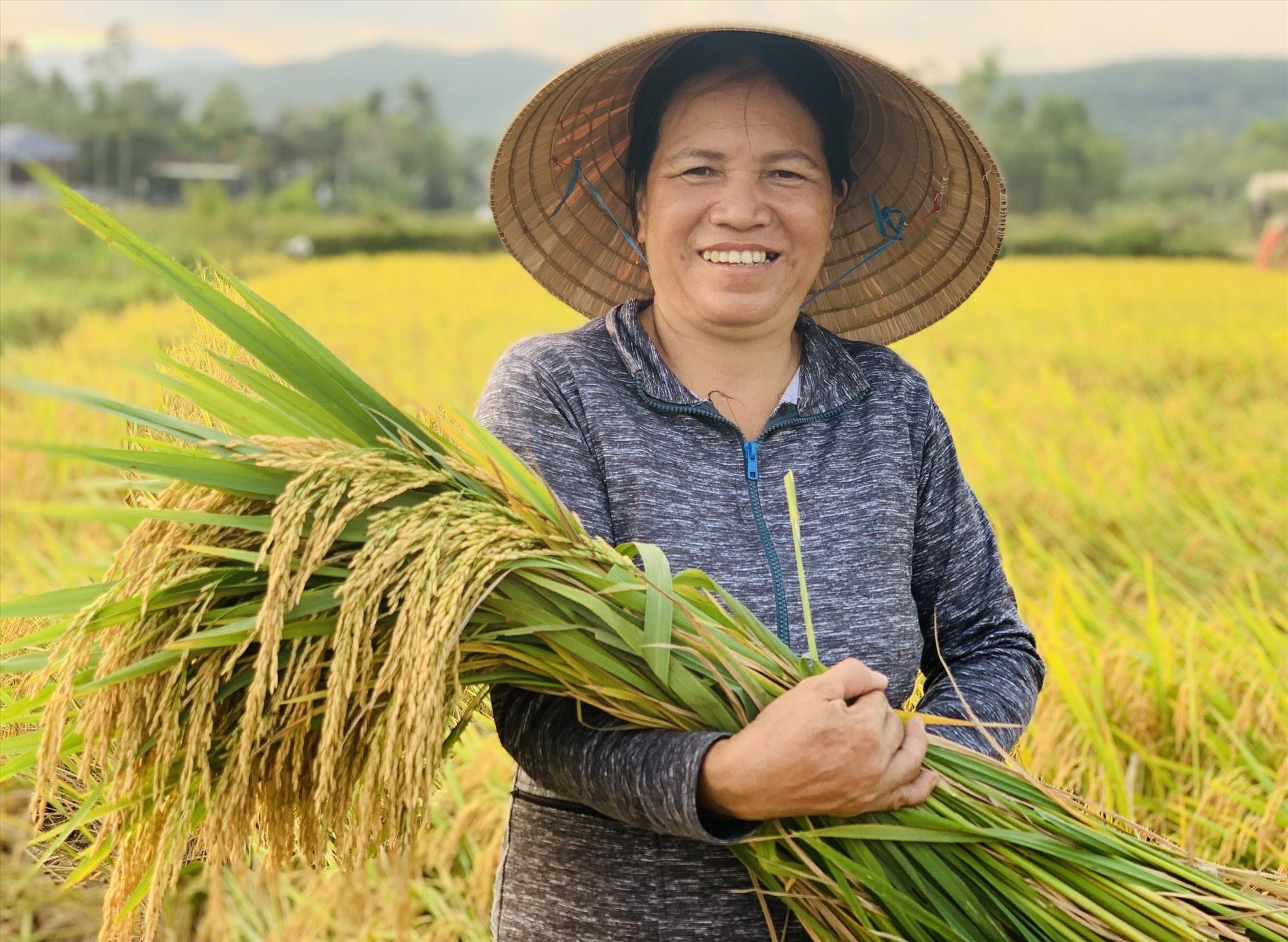 Bà Nguyễn Thị Vinh ở thôn Cang Đông (Quế Châu, Quế Sơn) phấn khởi khi vụ này năng suất lúa đạt 350kg/sào, tăng 90kg so với đông xuân năm ngoái.    Ảnh: T.P
