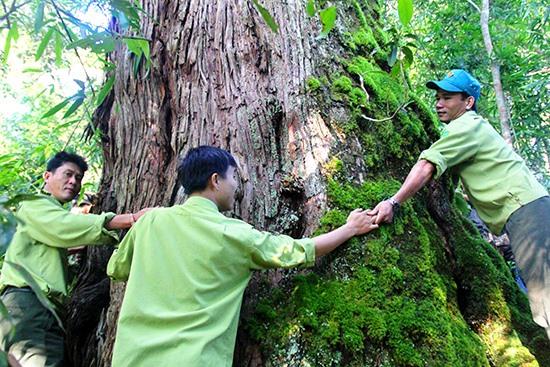 Lễ hội khai năm tạ ơn rừng đã thực sự tạo được sự gắn kết trong cộng đồng, giúp bảo vệ rừng già ở Tây Giang. Ảnh: ALĂNG NGƯỚC