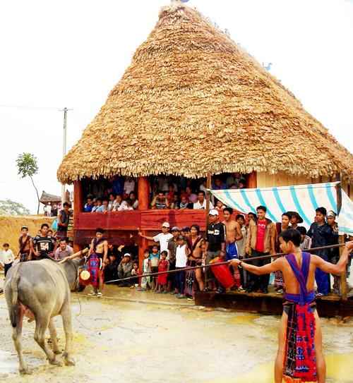 Lễ hội đâm trâu ở Đông Giang, một tập tục hiến sinh truyền thống nhưng gây cảm giác mạnh đối với du khách.