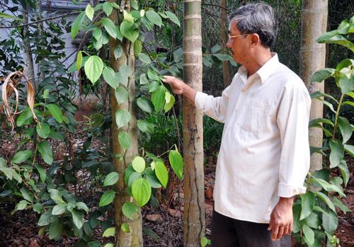 Ông Trương Công Thảy không đồng tình với cách áp giá BTHT cây trồng của cơ quan chức năng.