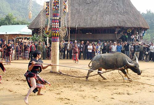 Lễ hội đâm trâu của đồng bào miền núi.