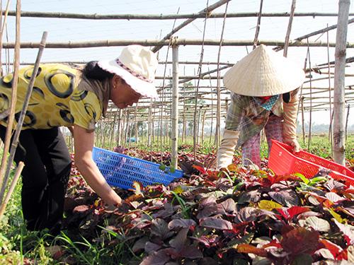 """Đẩy mạnh lên kết """"4 nhà"""" sẽ tạo đầu ra bền vững cho nông sản."""