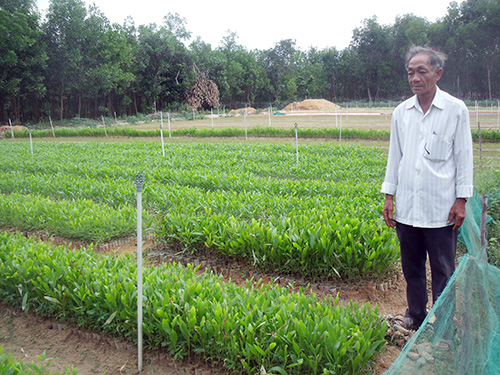 Ông Thành bên vườn keo ươm thu về hàng trăm triệu đồng mỗi năm.